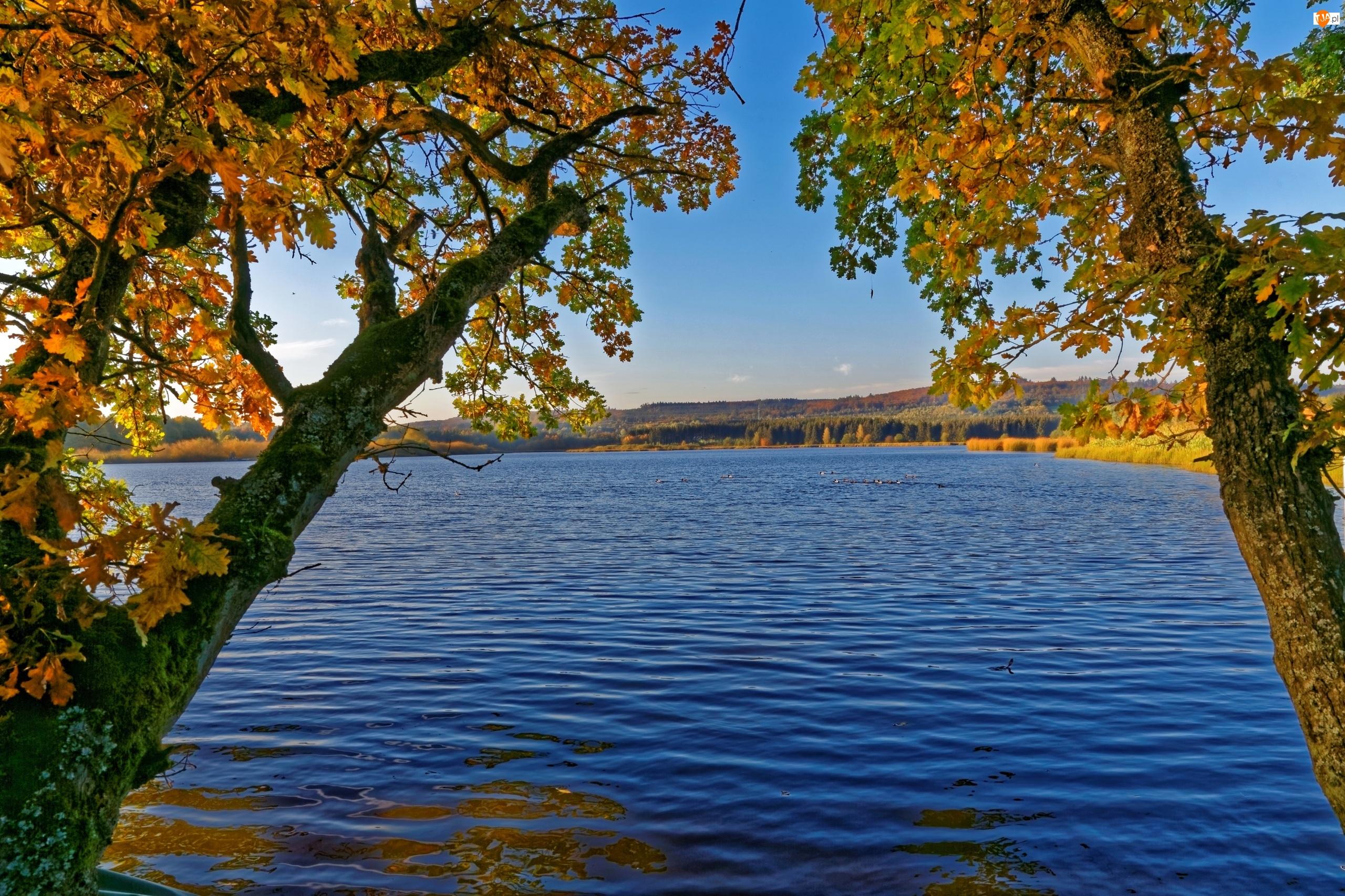 Jezioro, Pochylone, Drzewa