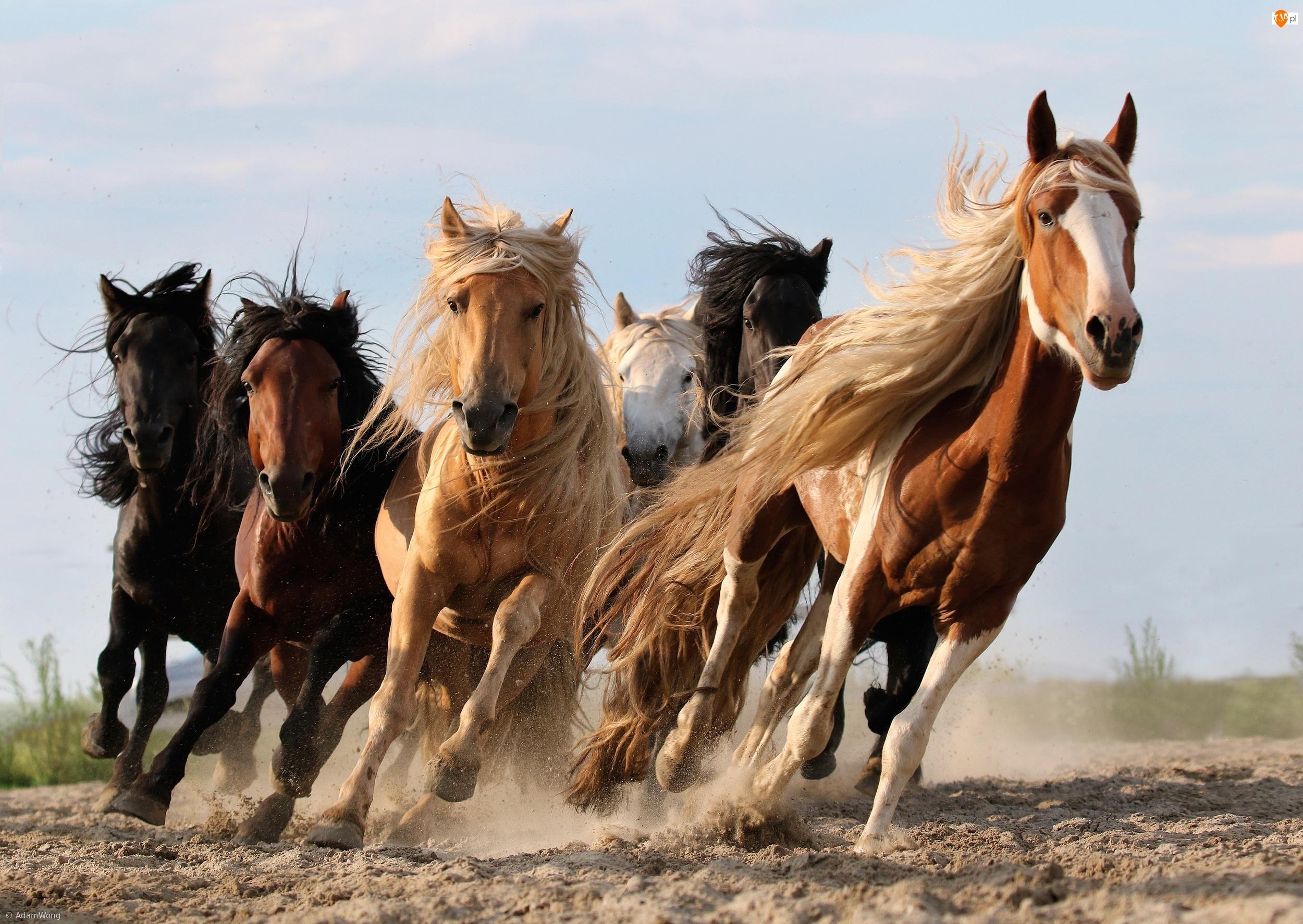 Galop, Konie, Bieg
