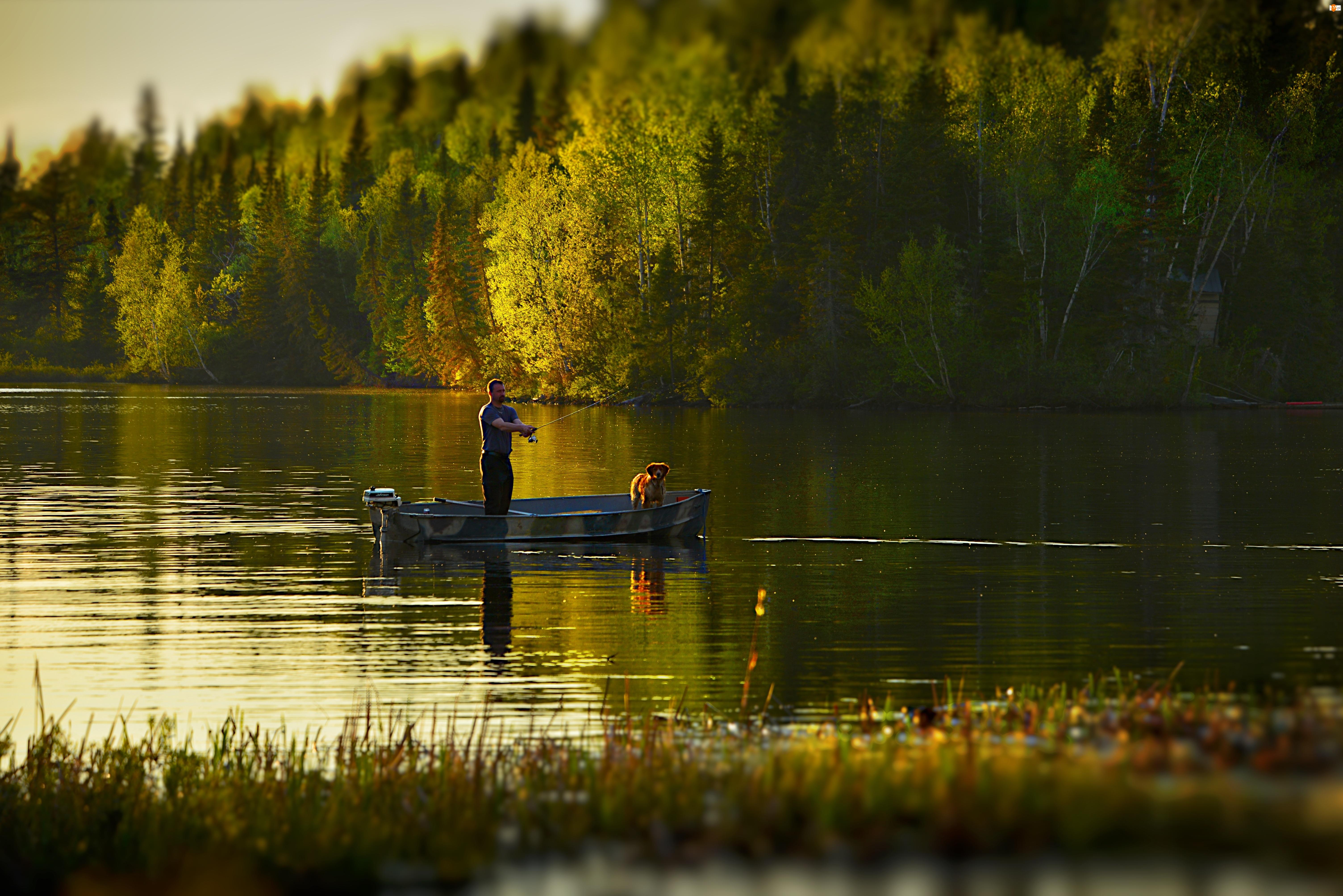 Wędkarz, Drzewa, Jezioro, Wędkowanie, Łódka, Pies