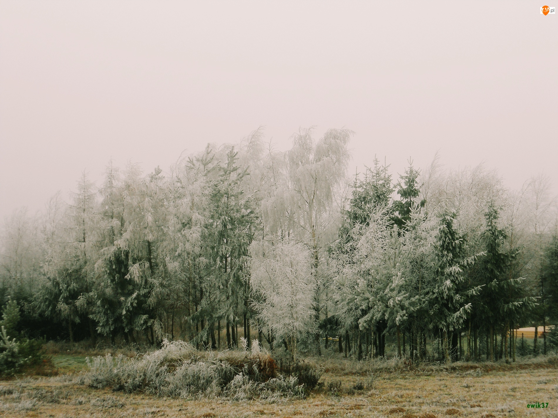 Drzewa, Las, Zima