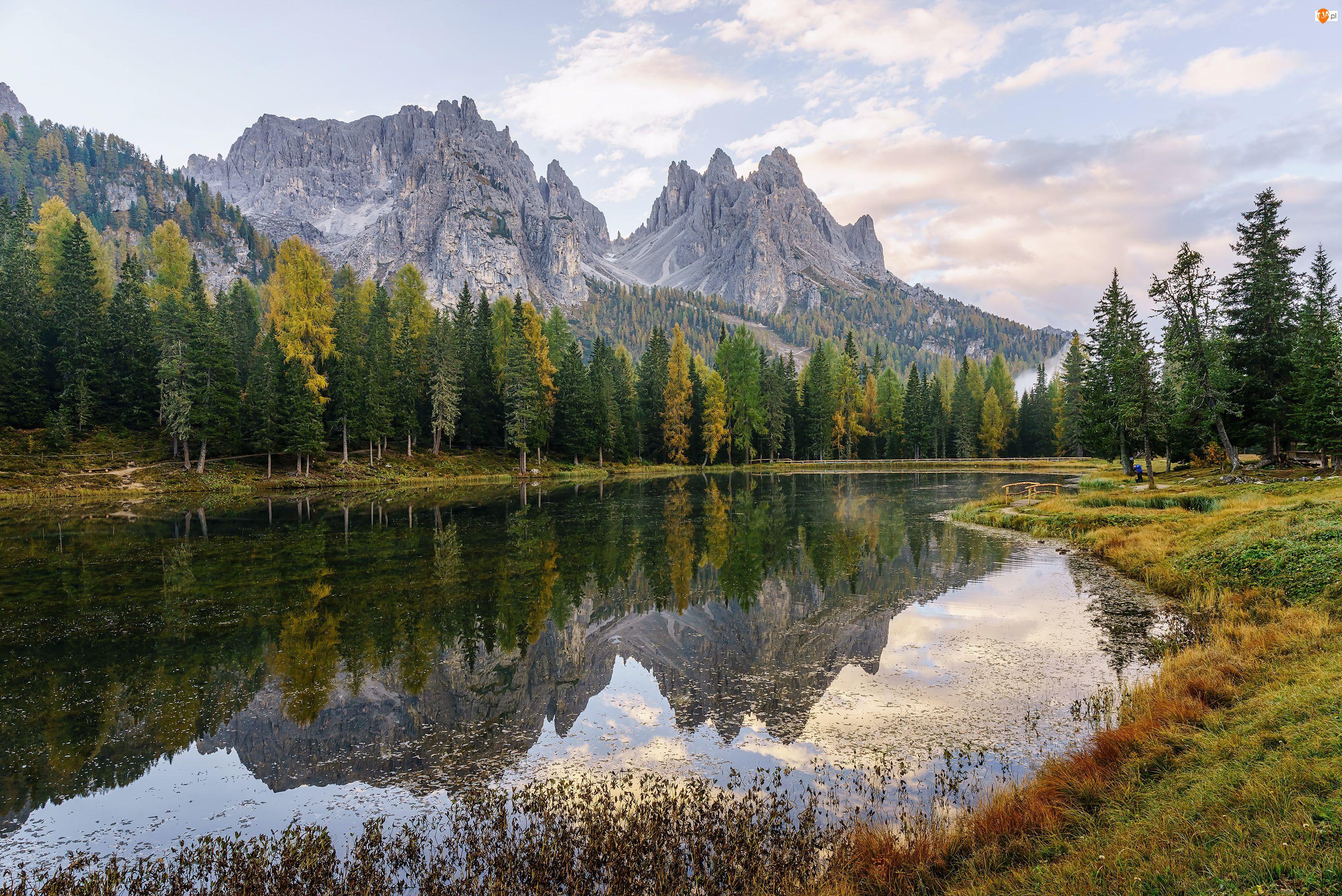 Drzewa, Góry, Dolomity, Włochy, Trawa, Jezioro Lago di Antorno, Las