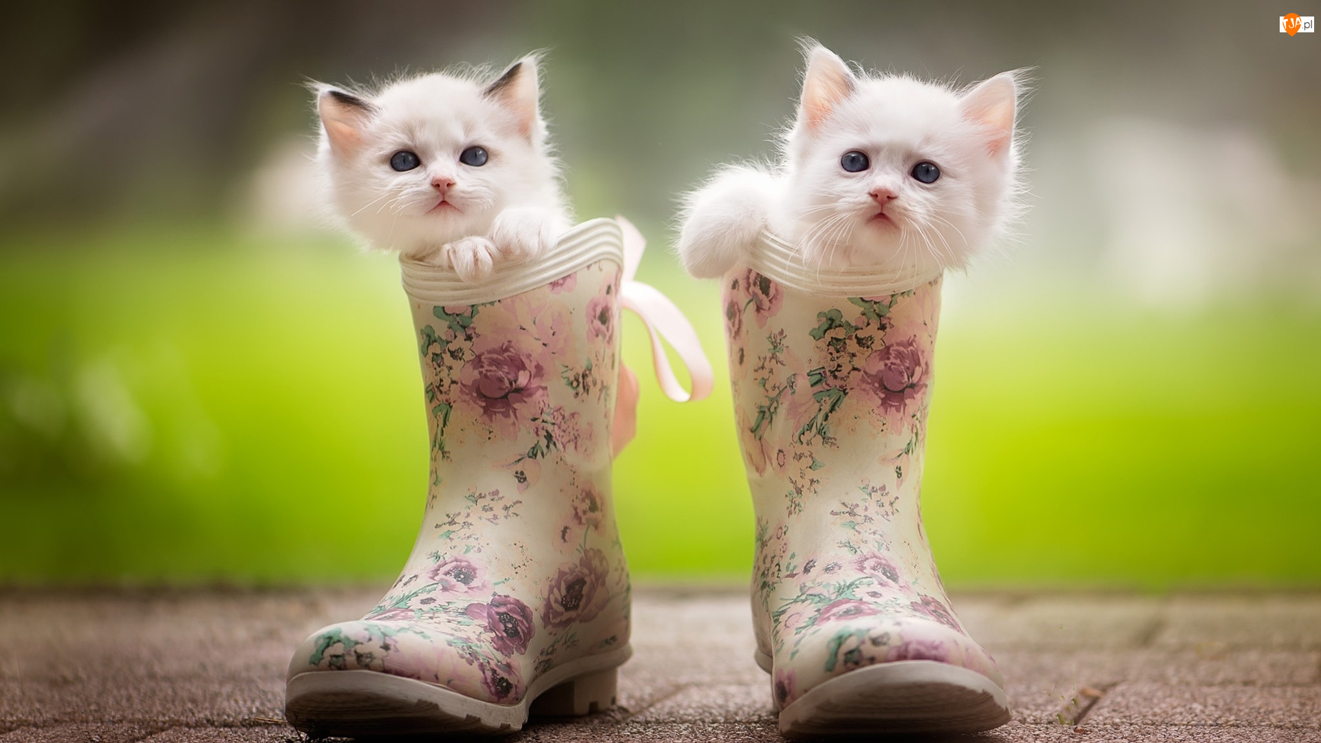 Koty, Kalosze