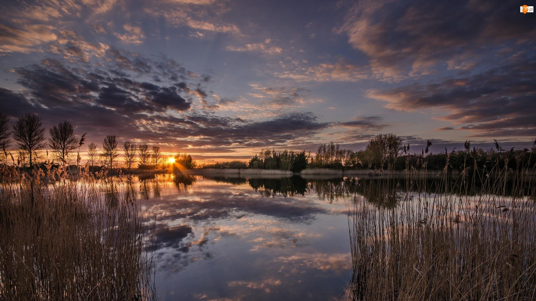 Rzeka Medway, Trawy, Anglia, Zachód słońca Anglia, Maidstone, Drzewa