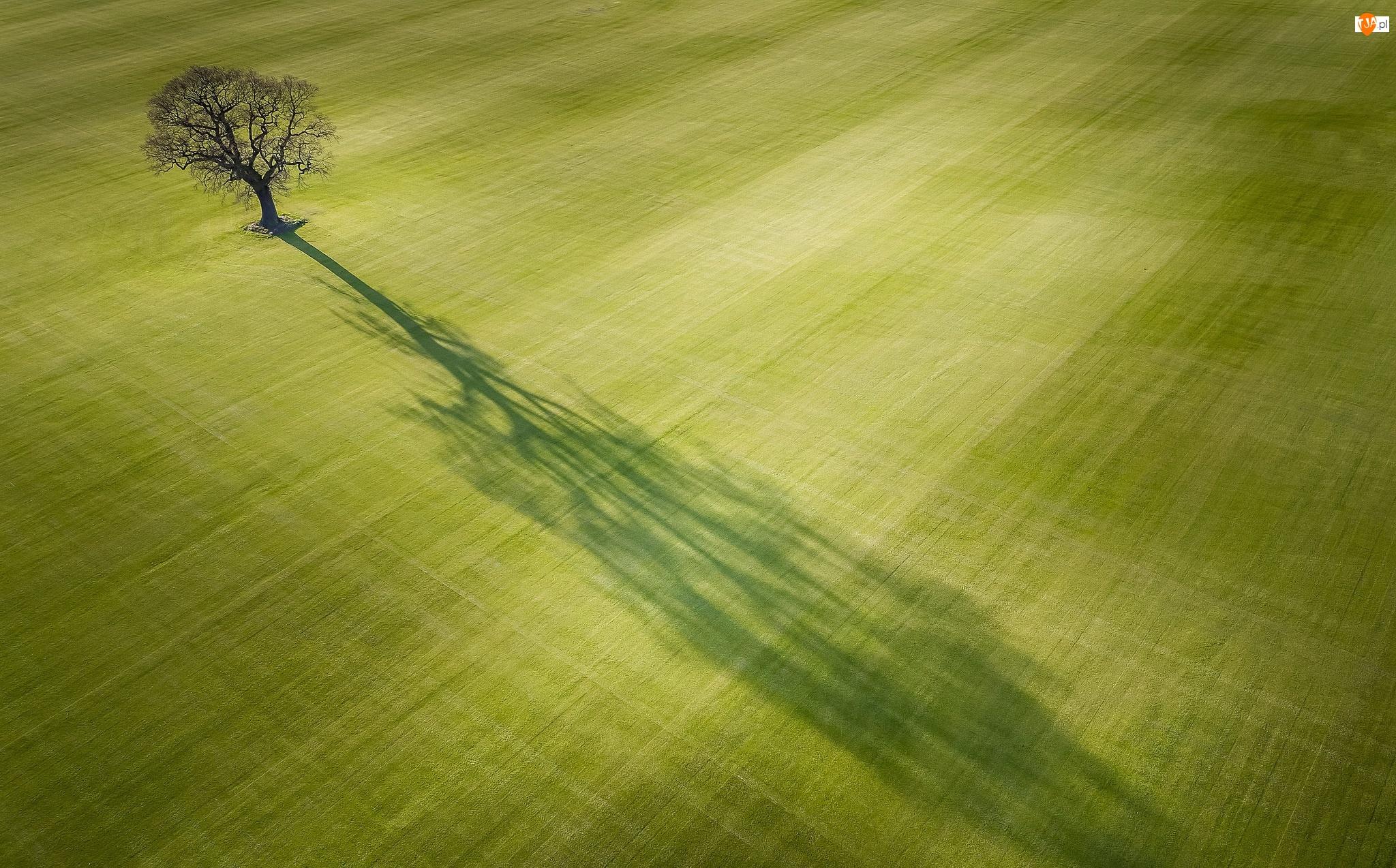 Cień, Pole, Drzewo