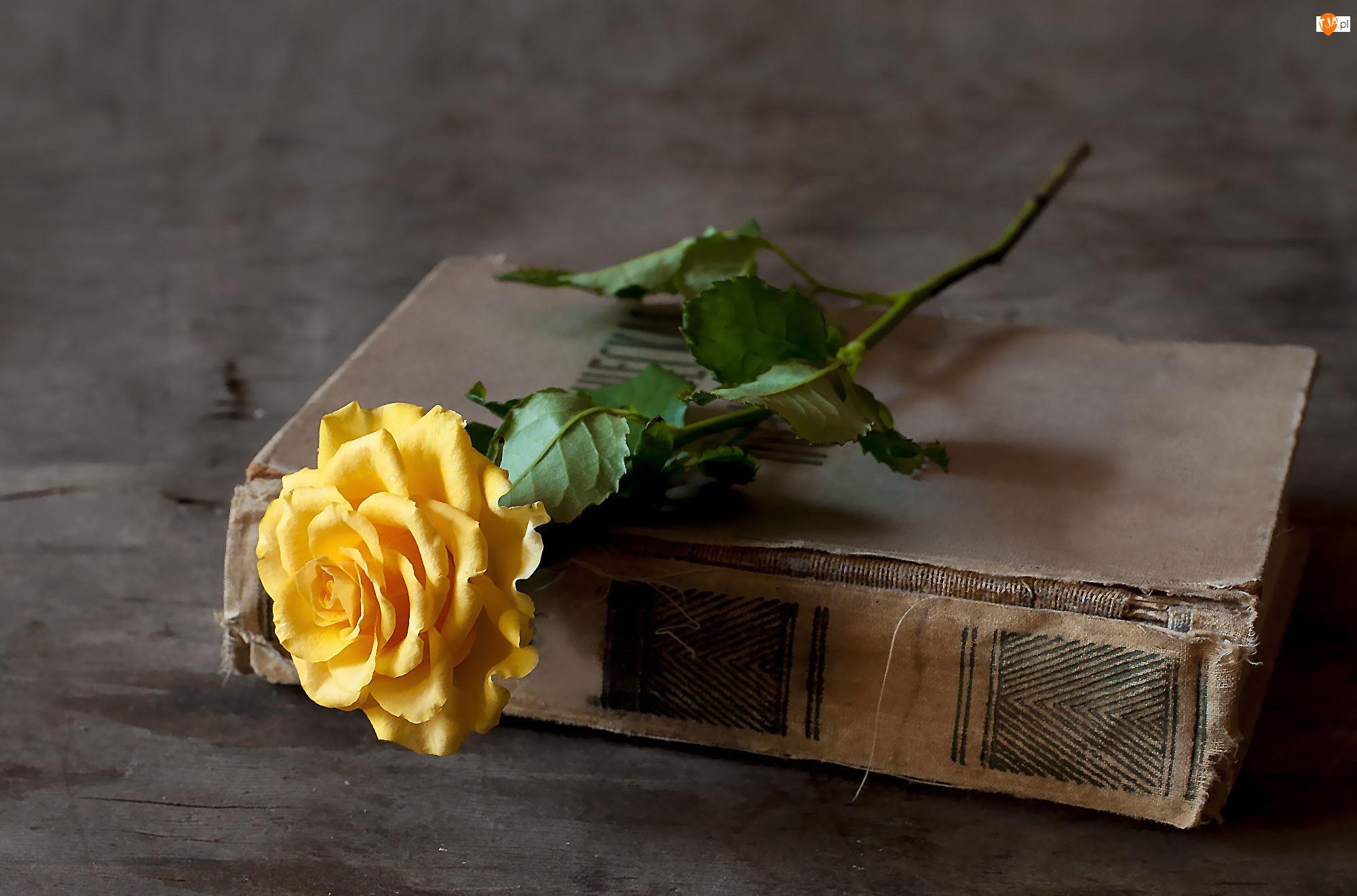 Żółta, Książka, Róża, Zniszczona