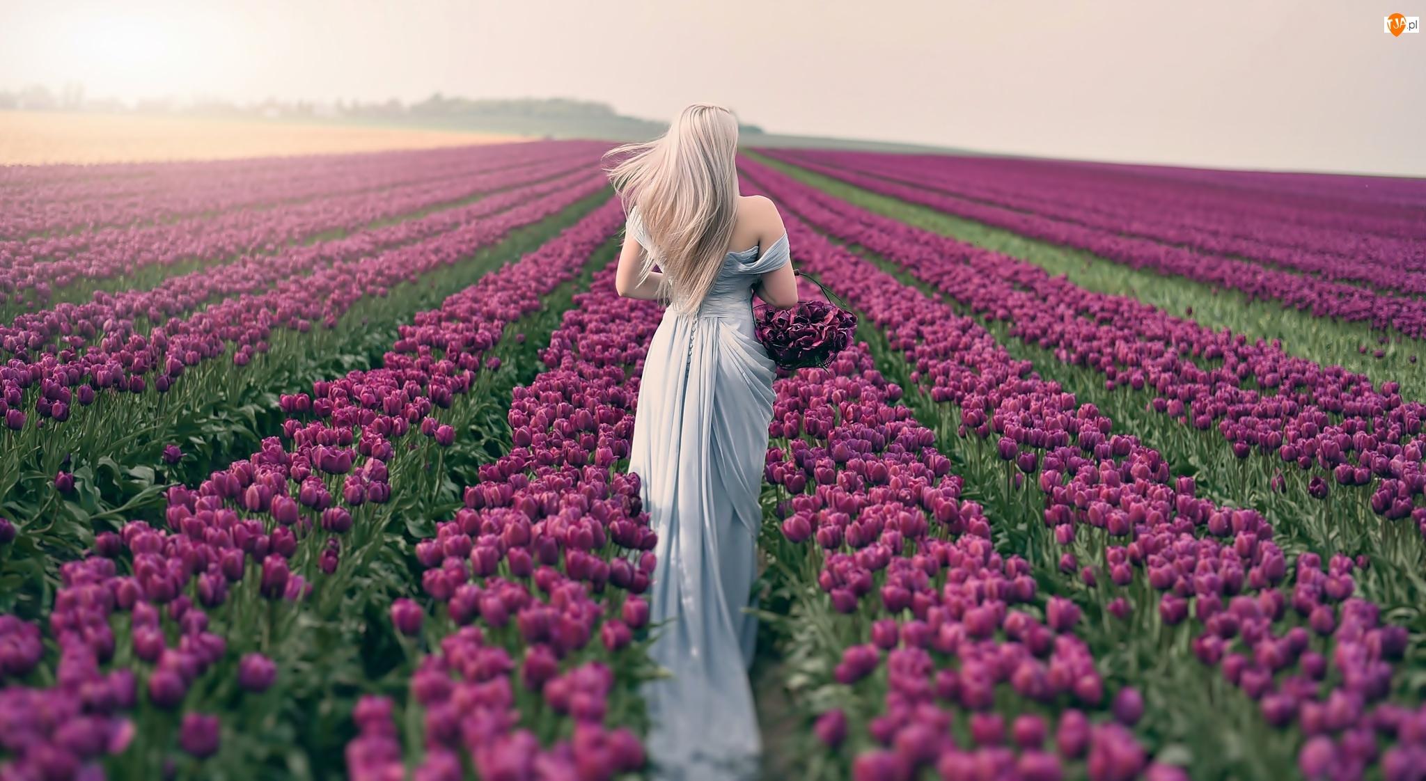 Pole tulipanów, Kobieta, Blondynka