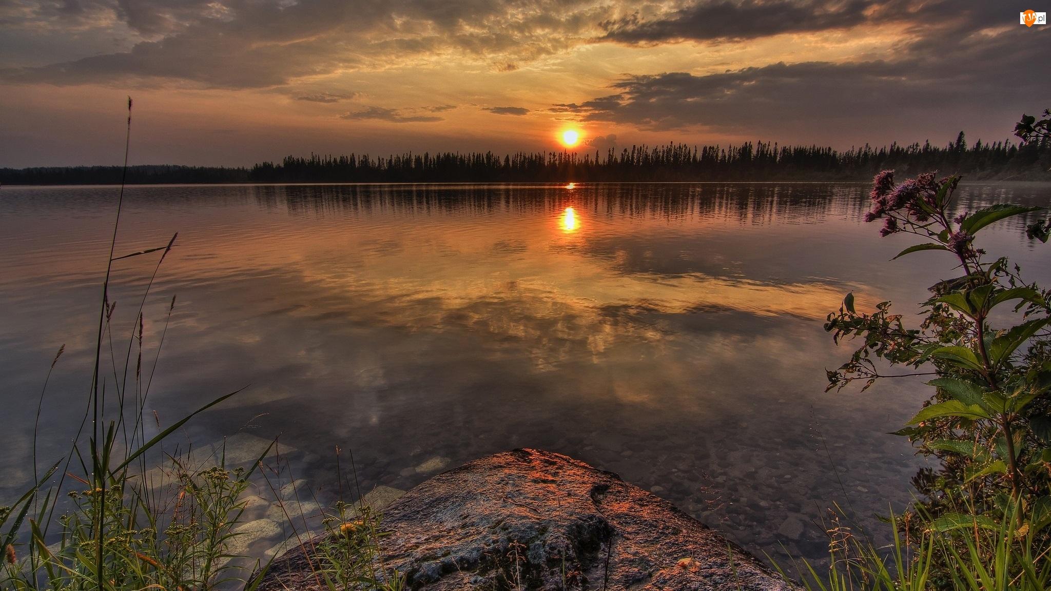 Rośliny, Jezioro, Zachód Słońca