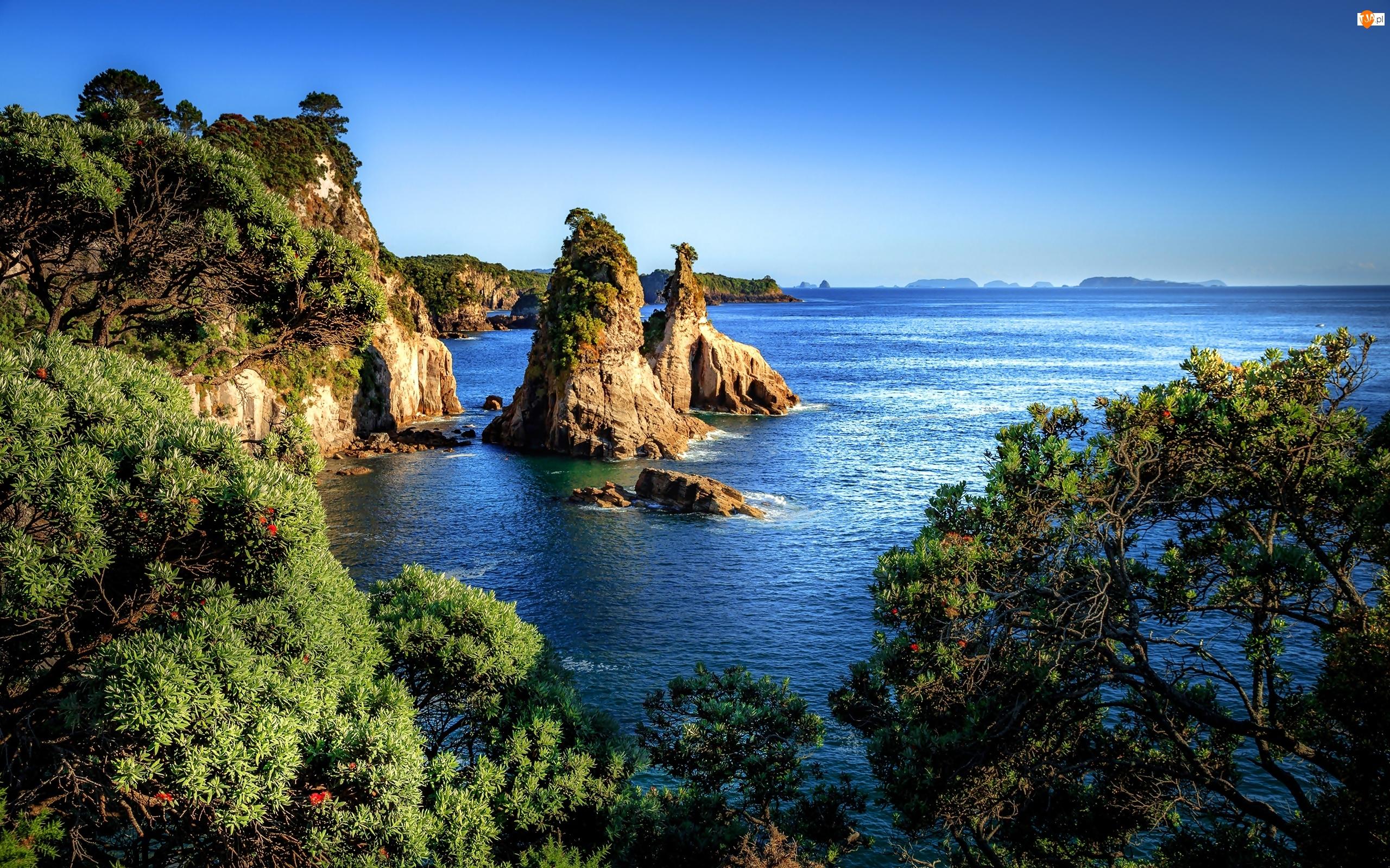 Morze, Wybrzeże, Nowa Zelandia, Krzewy, Hahei, Skały