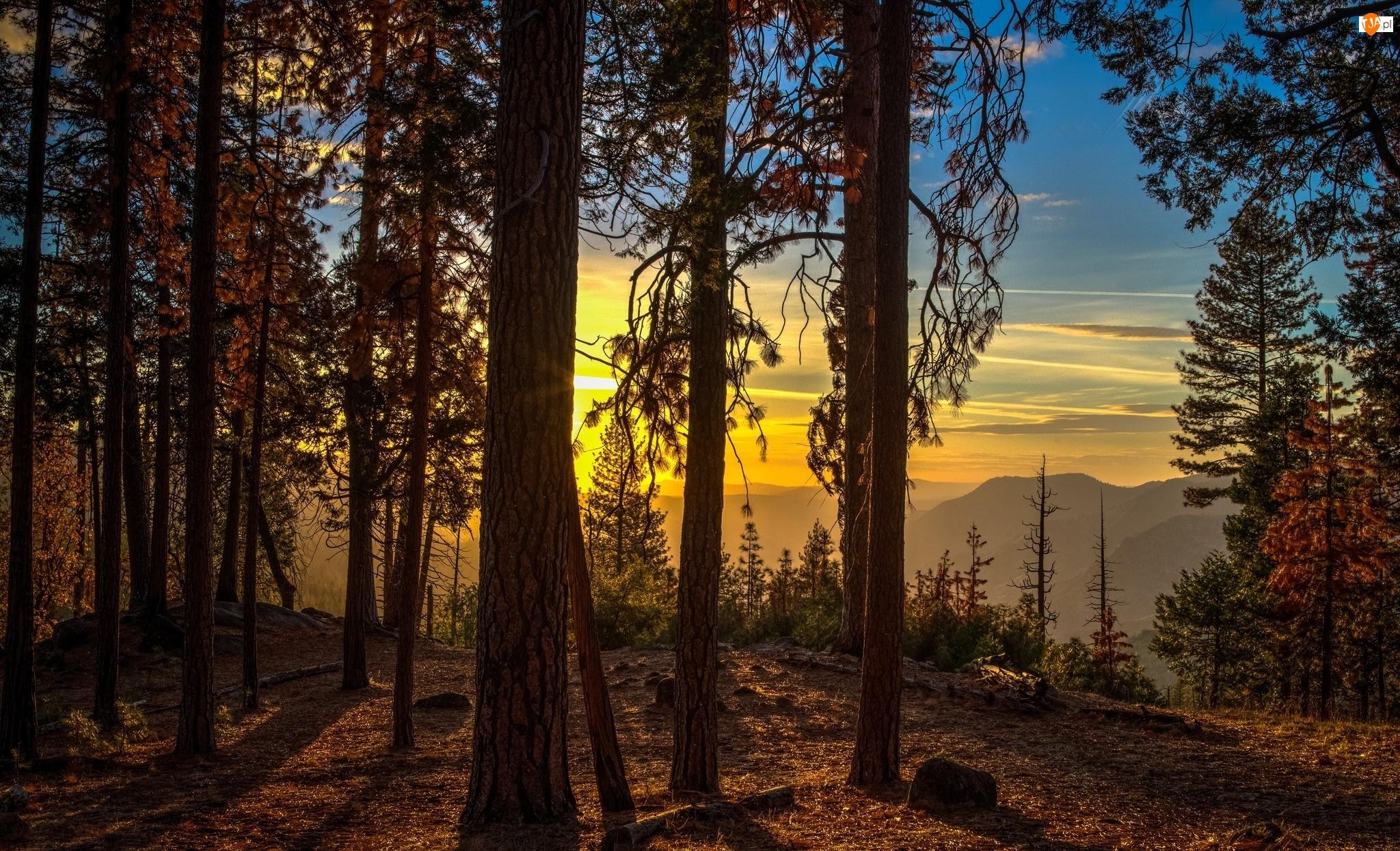 Wschód słońca, Drzewa, Stan Kalifornia, Stany Zjednoczone, Góry, Park Narodowy Yosemite, Las