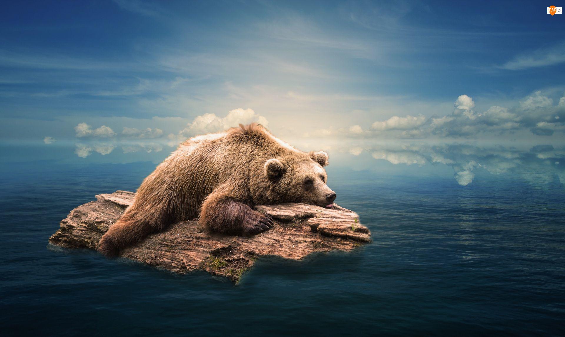 Niedźwiedź, Drewna, Brunatny, Kłoda