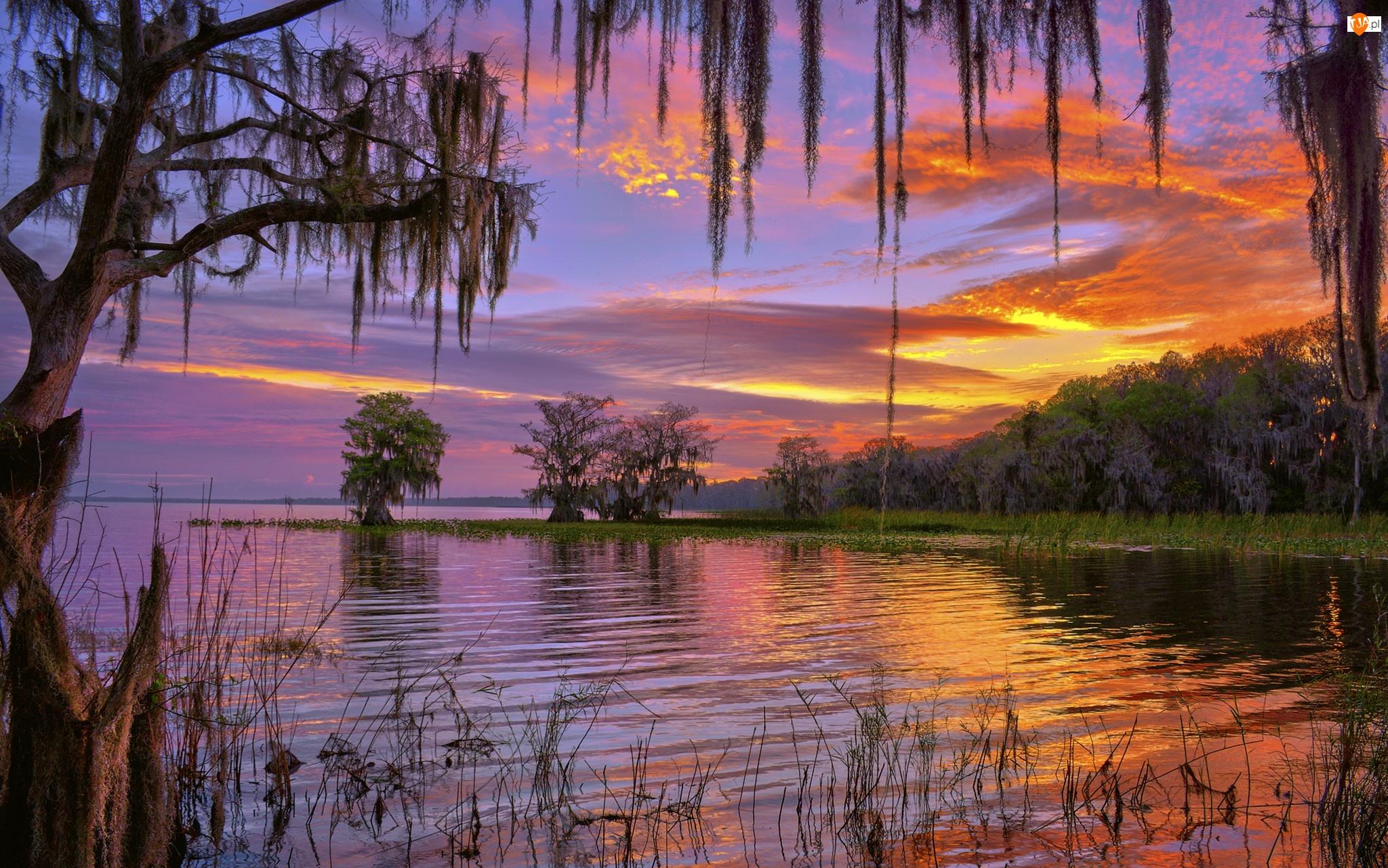 Drzewa, Stany Zjednoczone, Zachód słońca, Stan Floryda, Jezioro Istokpoga