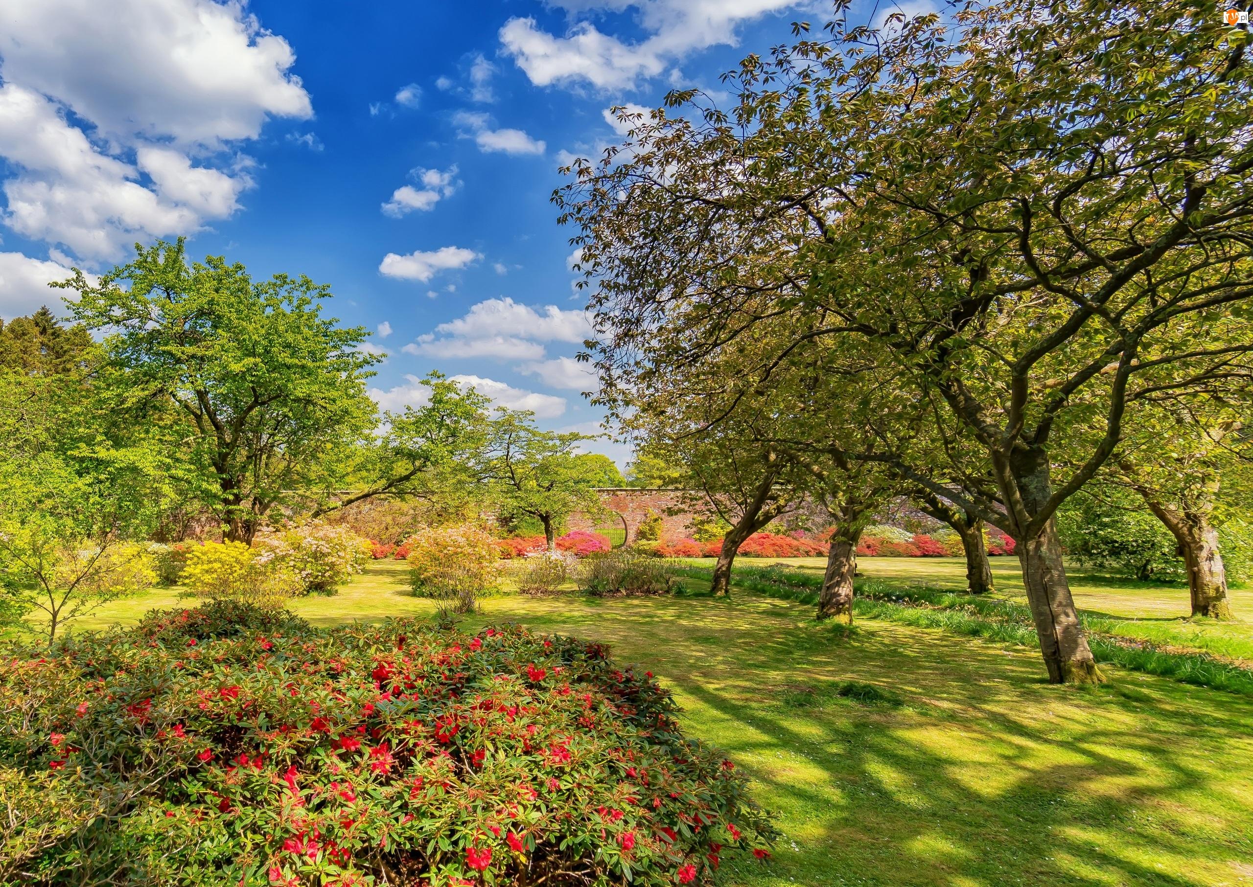 Ogród Bargany Gardens, Drzewa, Szkocja, Kwiaty, Girvan, Lato