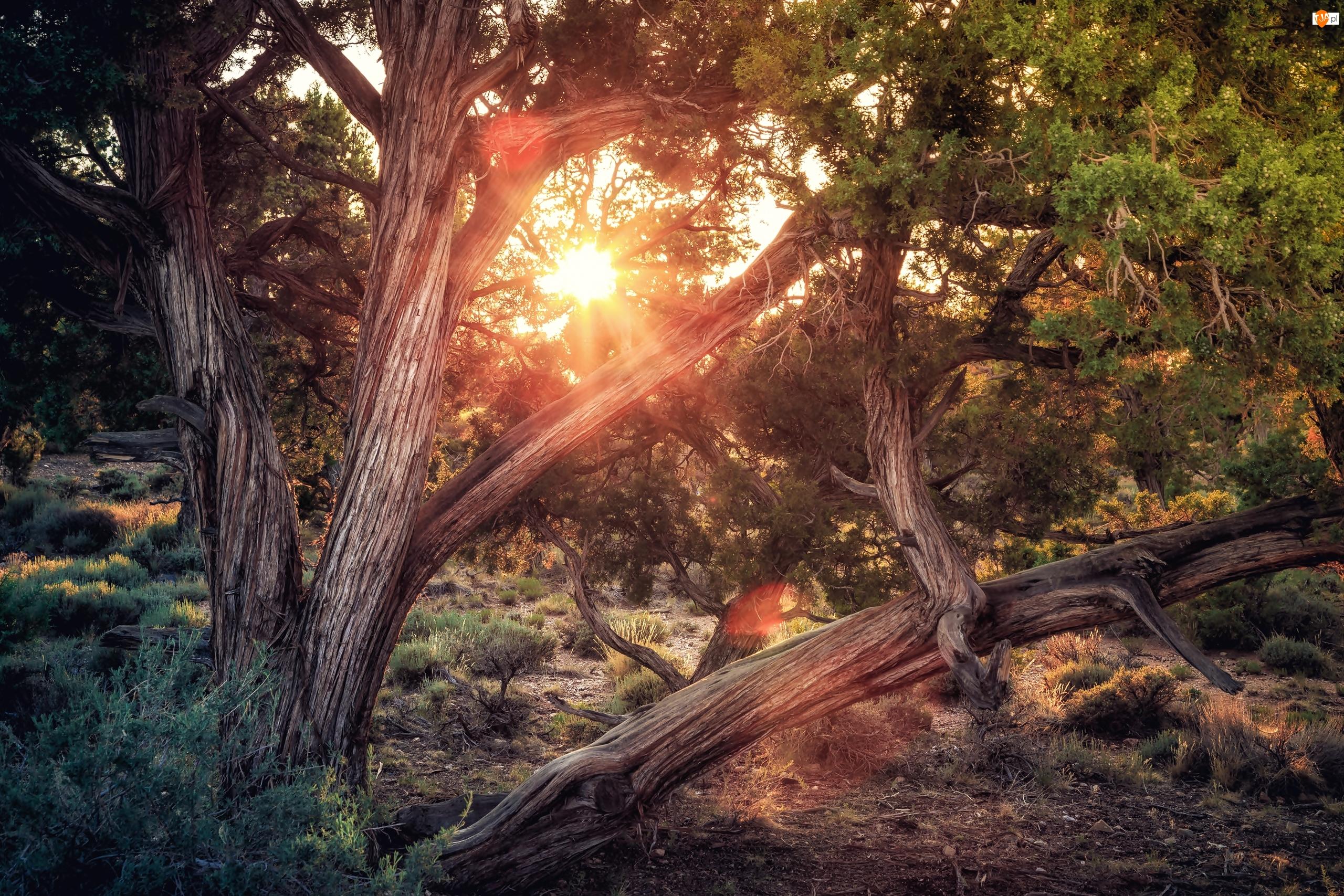 Drzewa, Las, Konary, Promienie słońca
