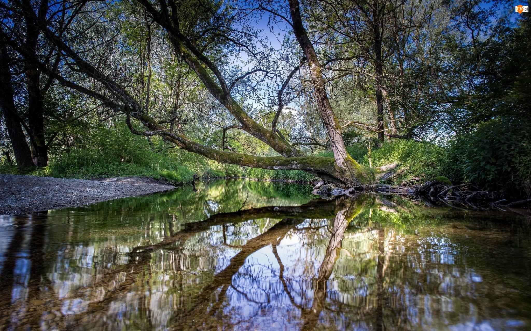 Rzeka, Odbicie, Pochylone, Drzewa