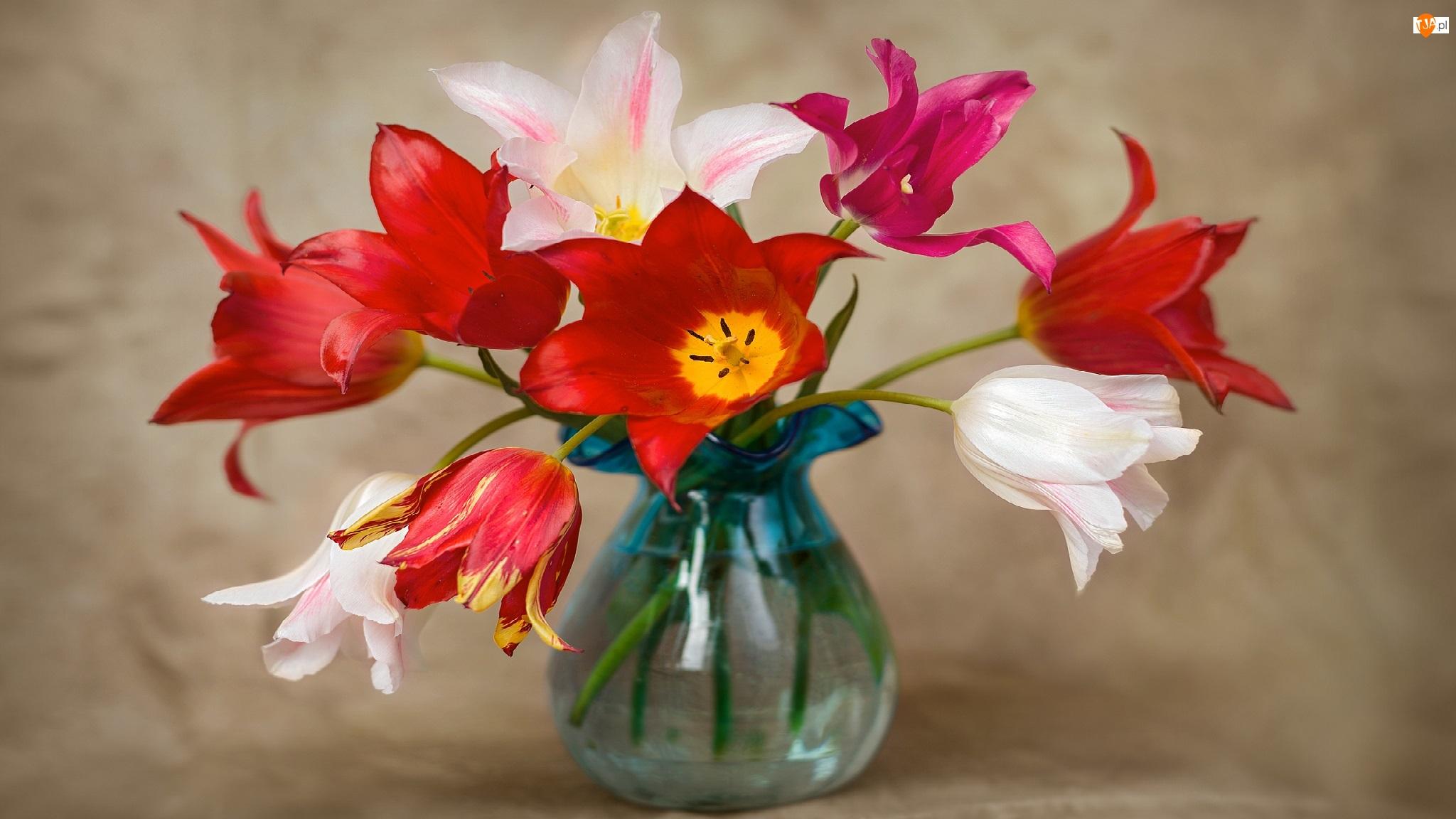 Kolorowe, Wazon, Tulipany, Szklany