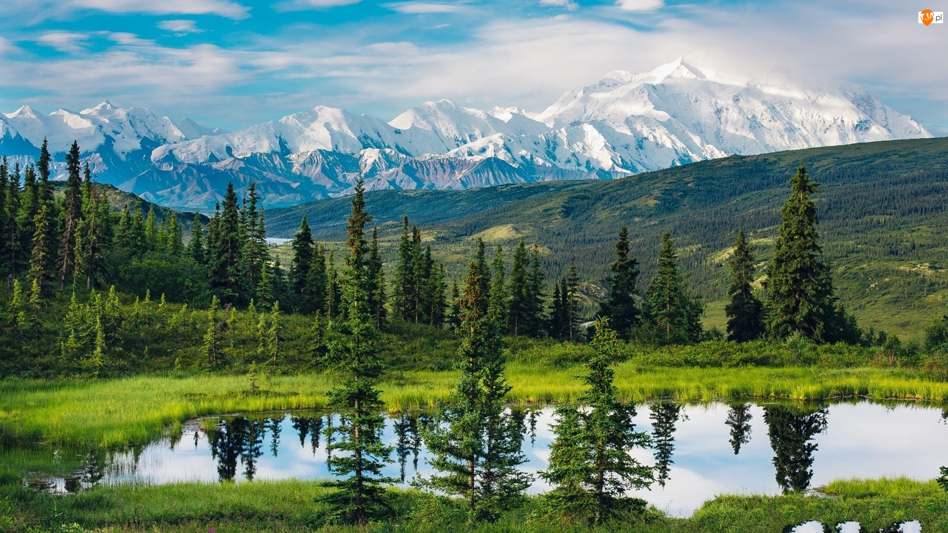 Góry, Drzewa, Stany Zjednoczone, Jezioro, Alaska, Park Narodowy Denali