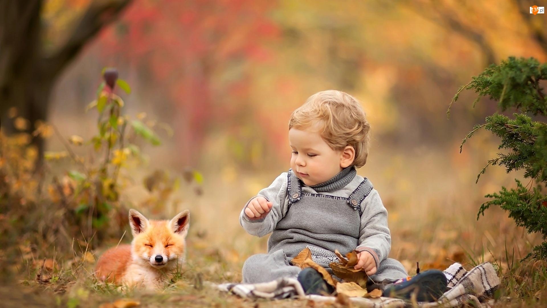 Lisek, Jesień, Dziecko