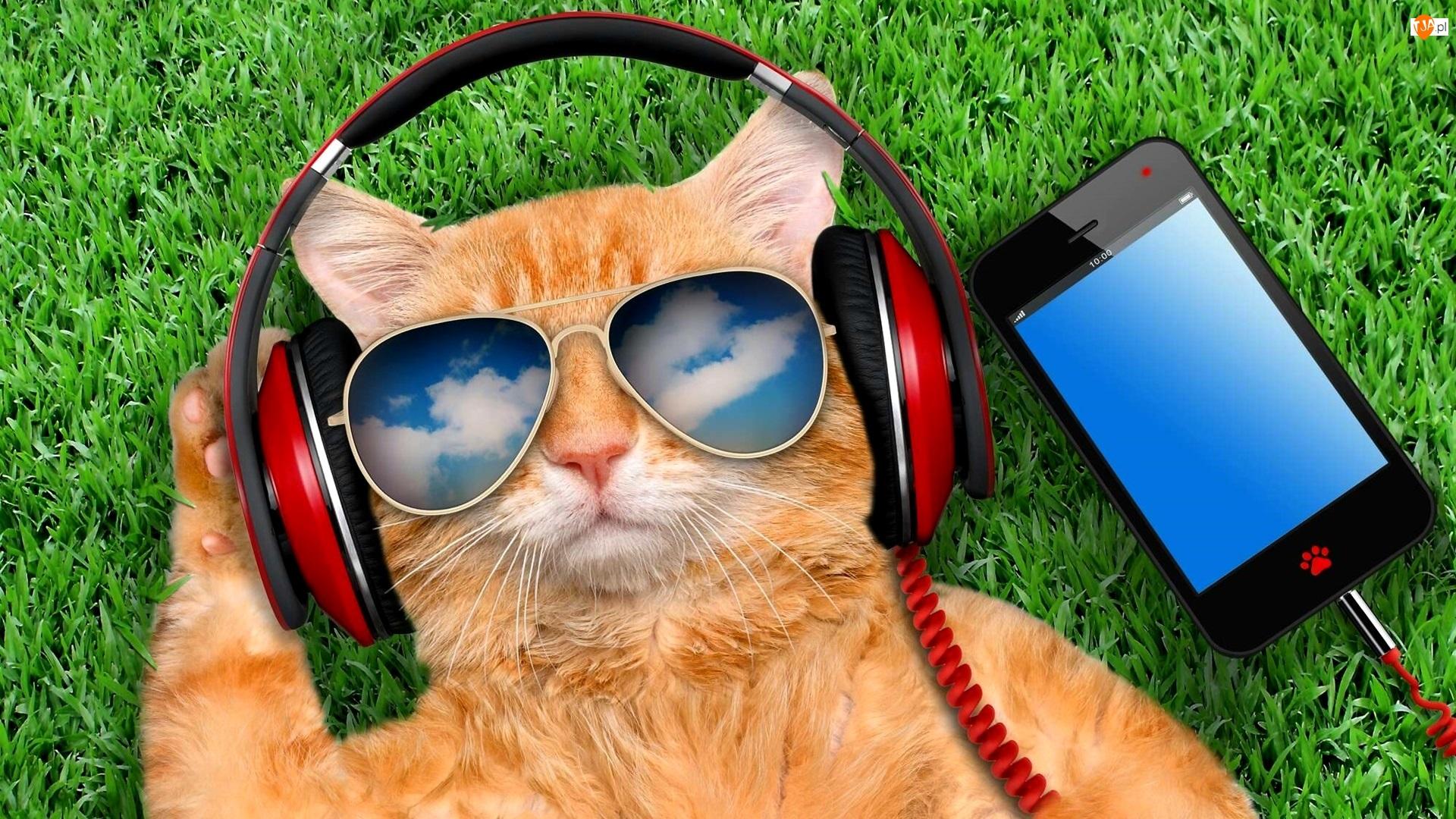 Okulary, Trawa, Kot, Śmieszne, Słuchawki, Telefon