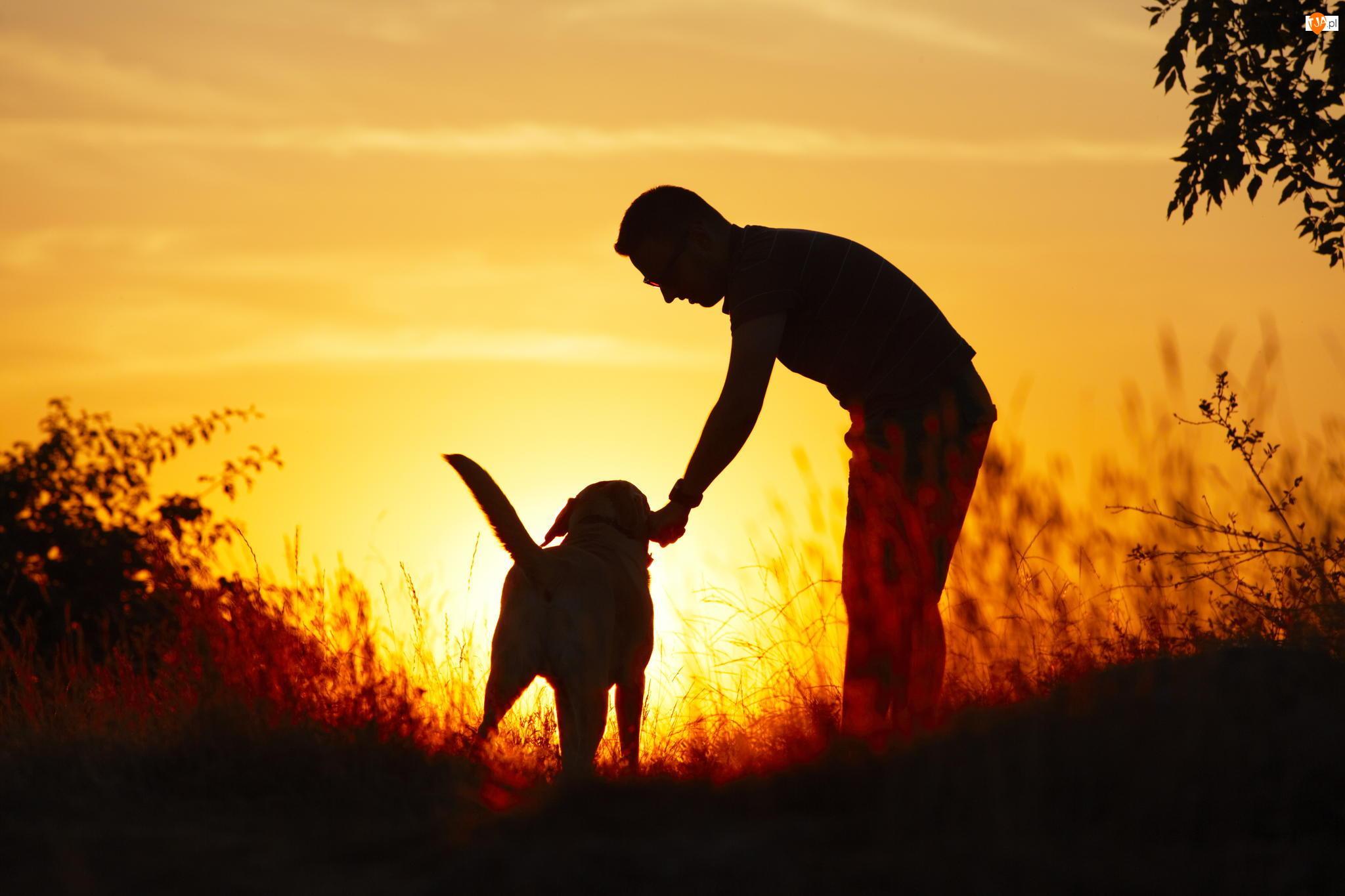 Mężczyzna, Trawa, Pies, Zachód słońca
