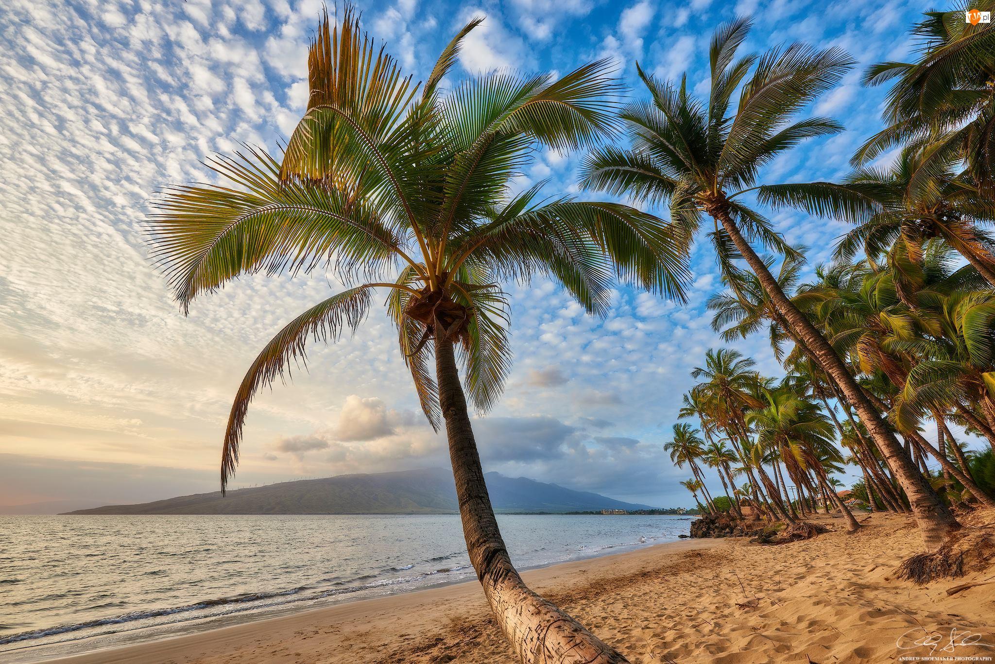 Morze, Hawaje, Palmy, Wyspa Maui, Plaża