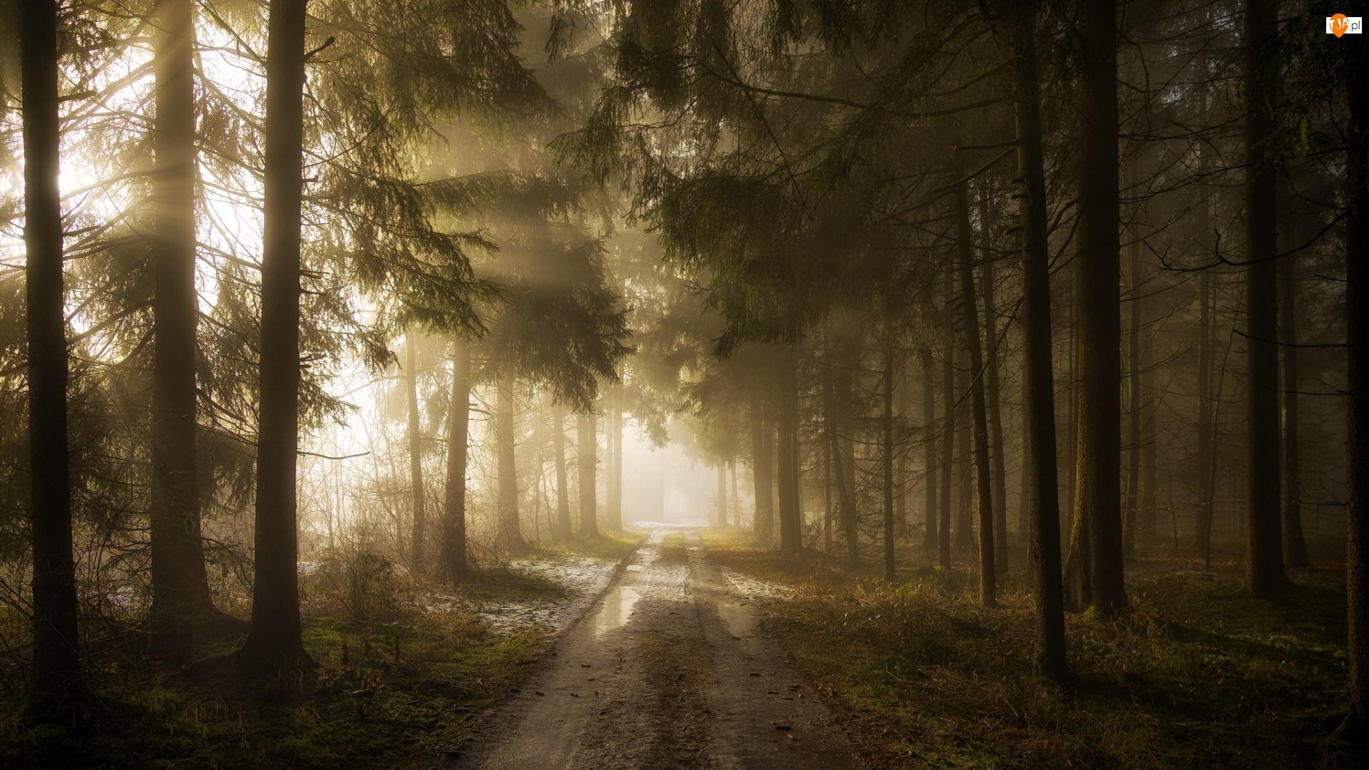 Las, Przebijające światło, Droga, Kałuże