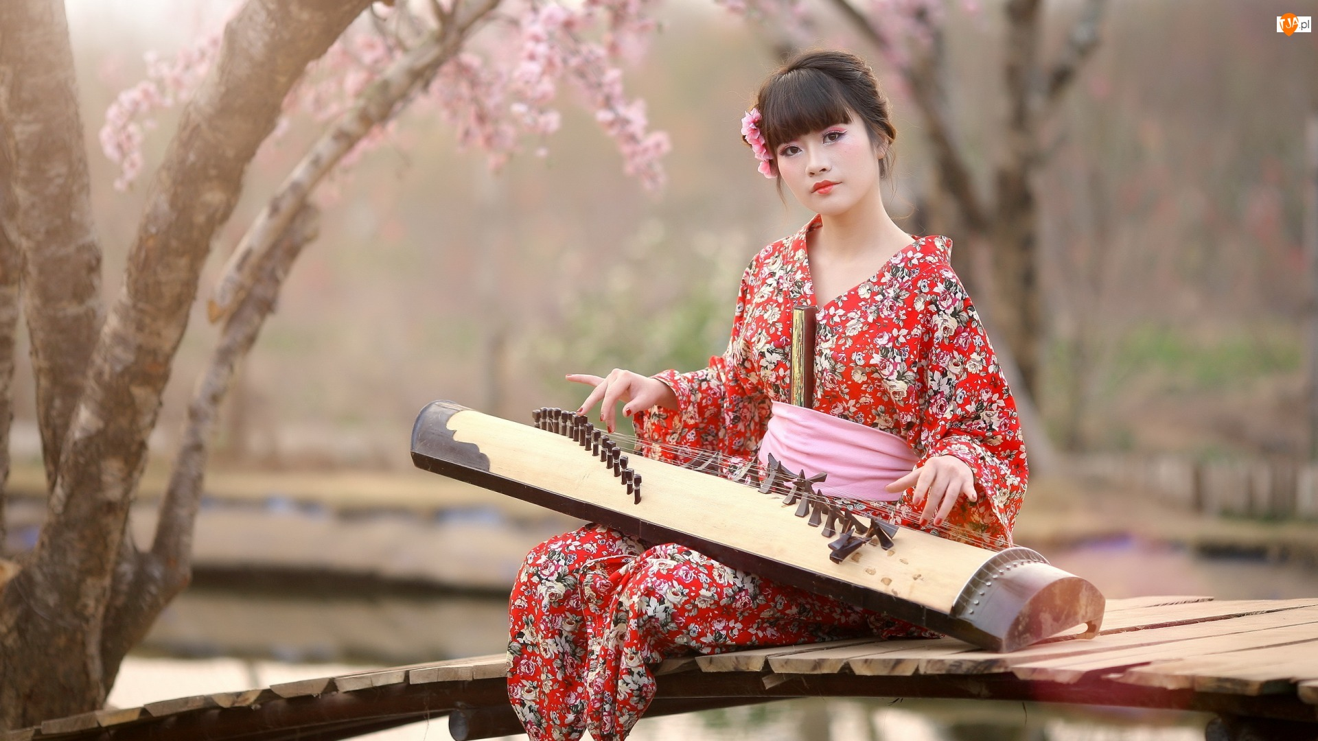 Dziewczyna, Koto, Kimono, Instrument