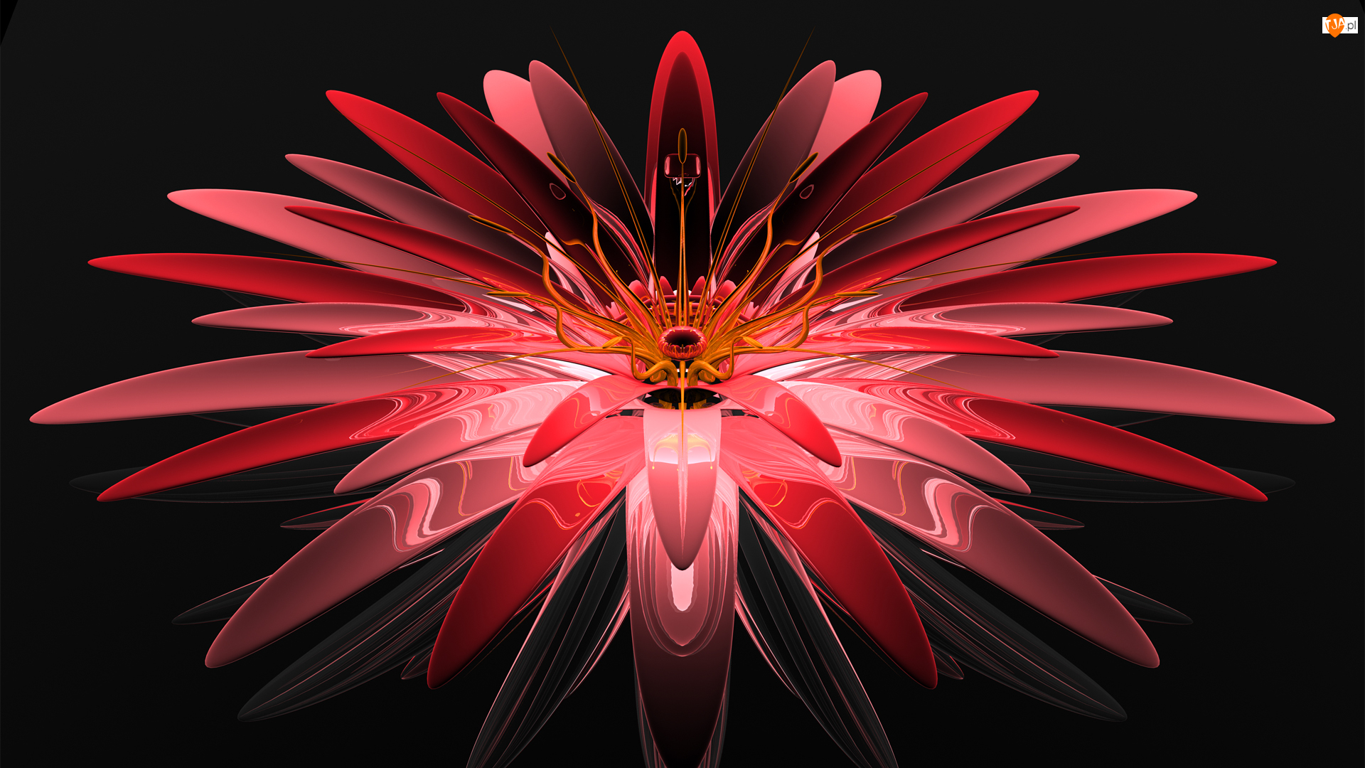 Kwiat, Grafika 3D, Czerwony