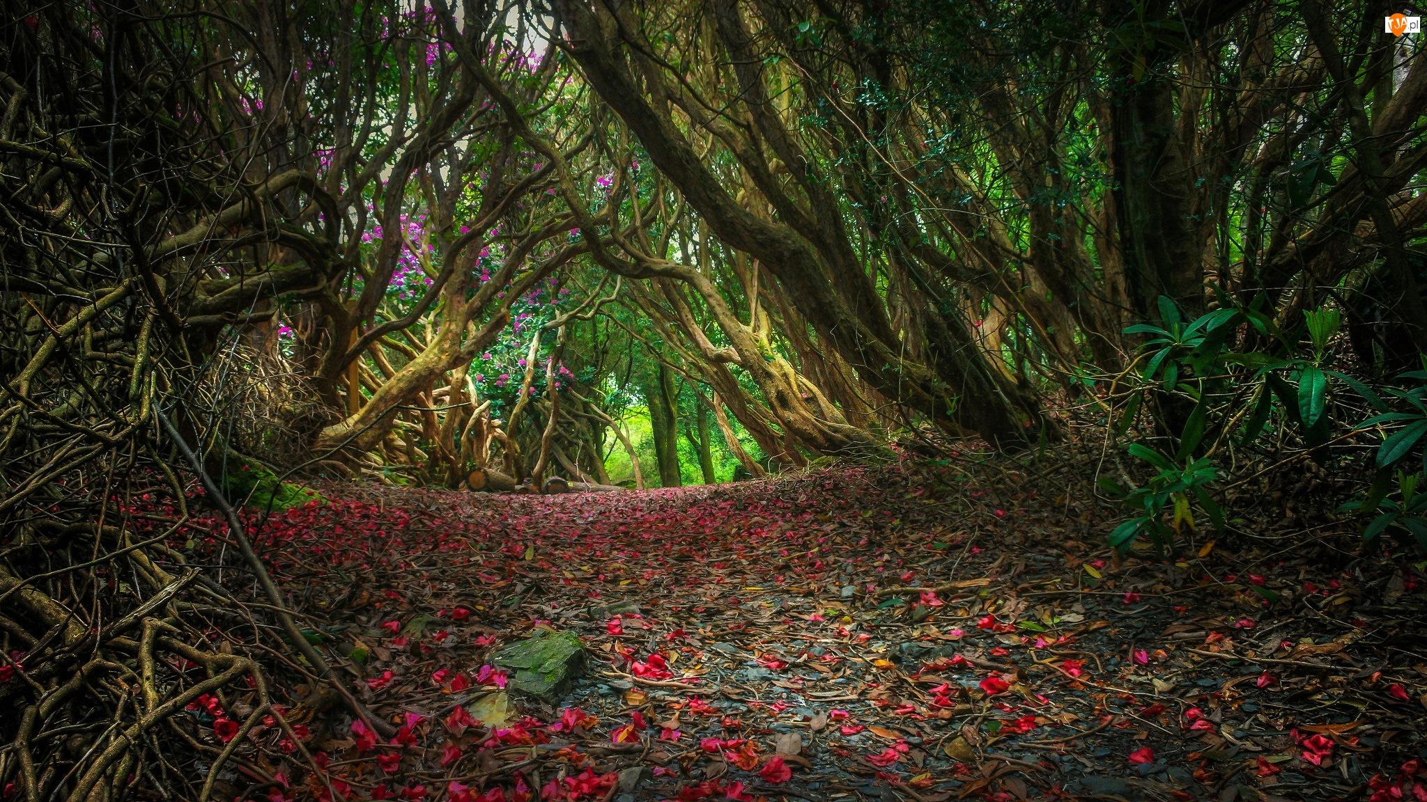 Las, Kwiatów, Droga, Płatki