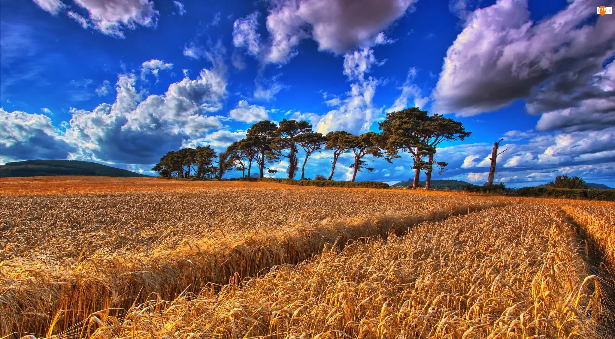 Pole, Chmury, Zboże, Drzewa