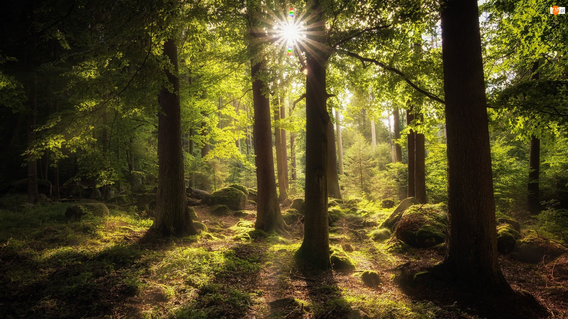 Promienie słońca, Las, Drzewa