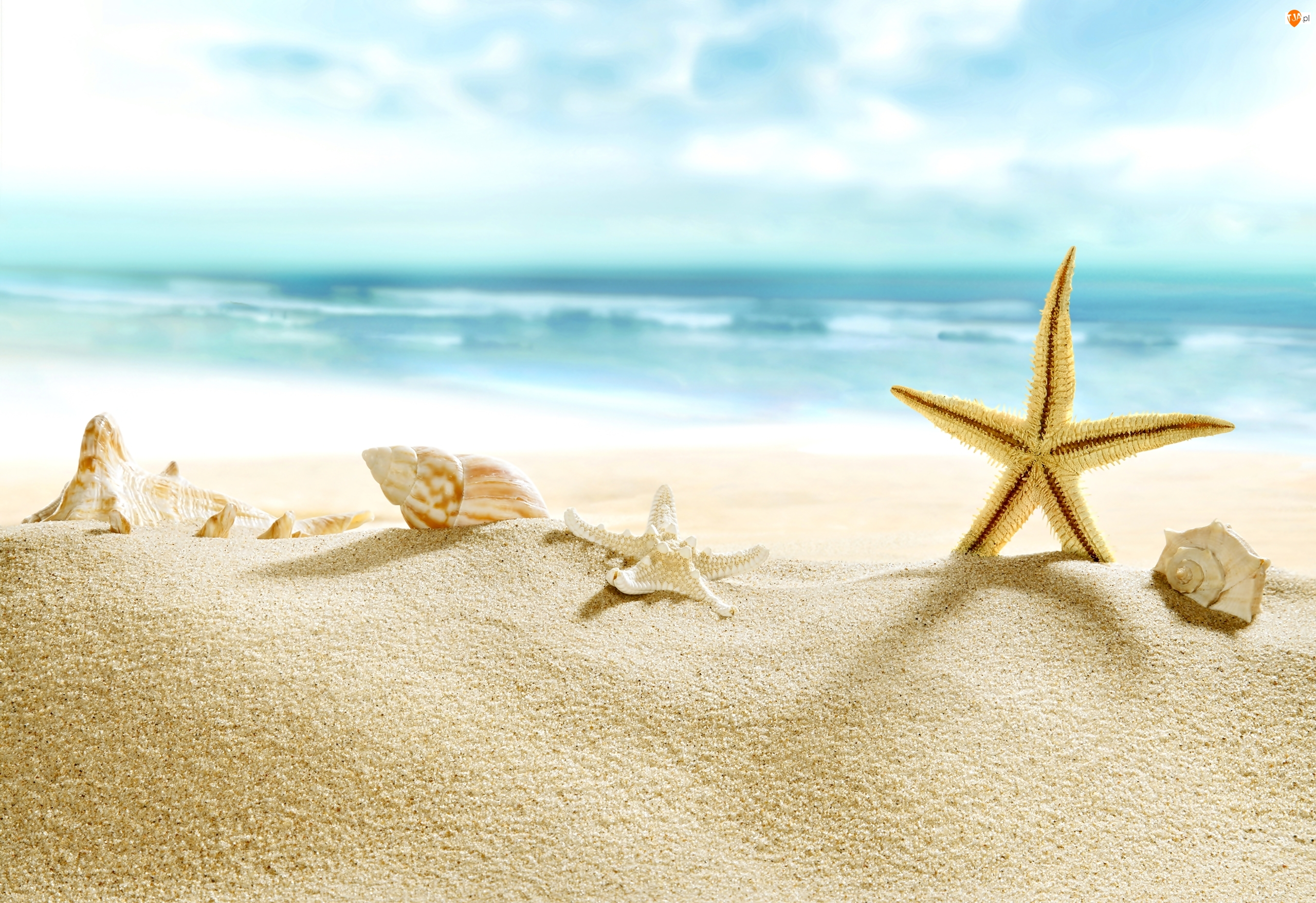 Rozgwiazda, Lato, Morze, Plaża, Muszle