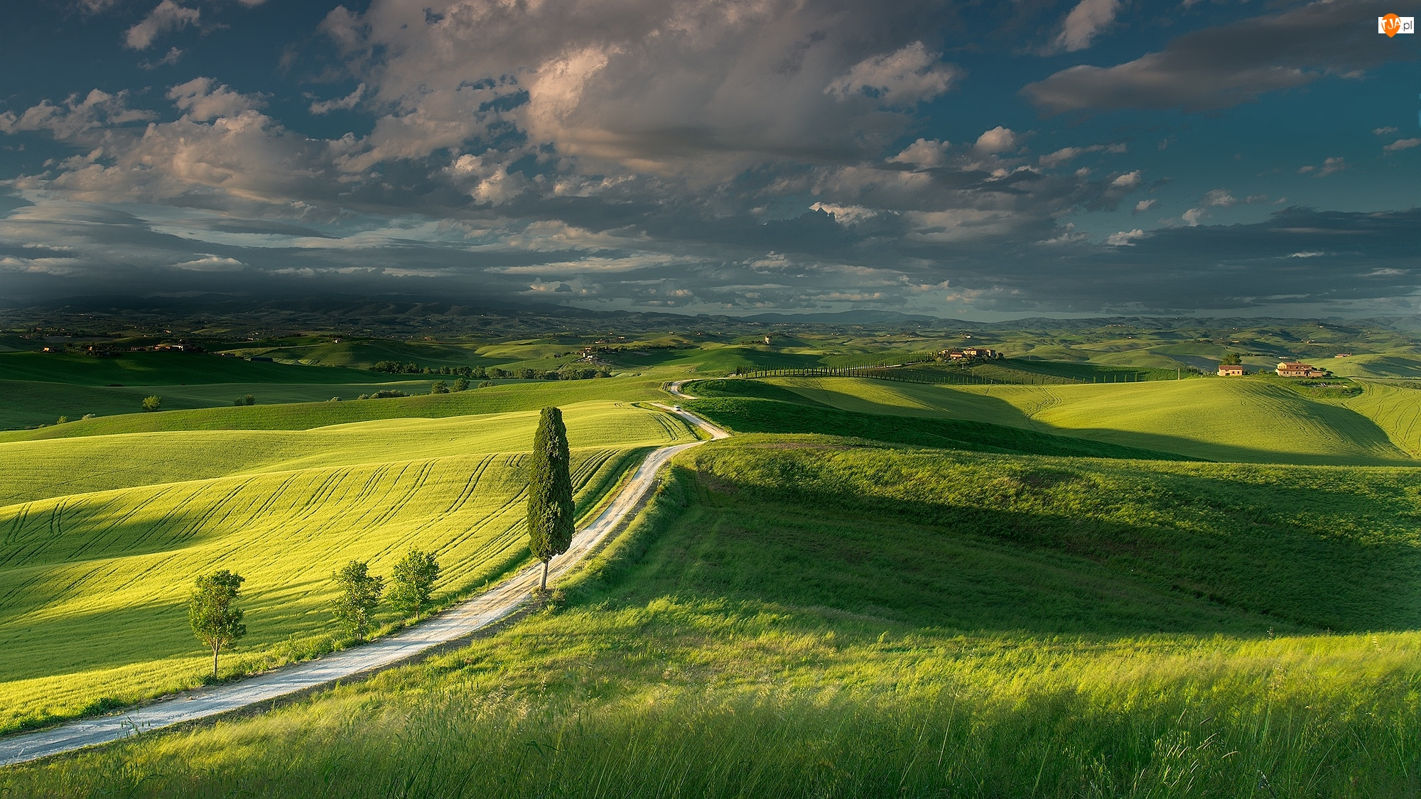 Drzewa, Włochy, Pola, Toskania, Droga