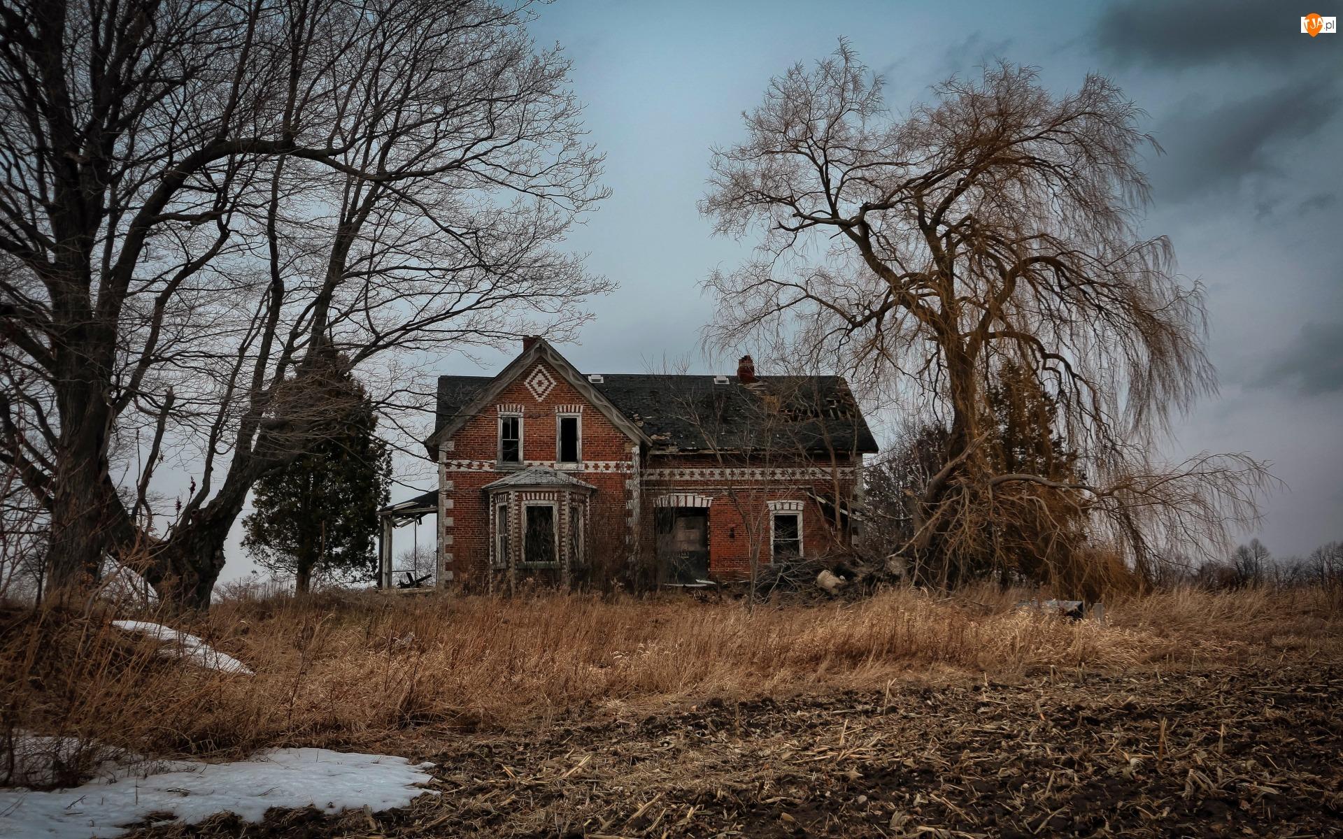 Drzewa, Opuszczony, Dom