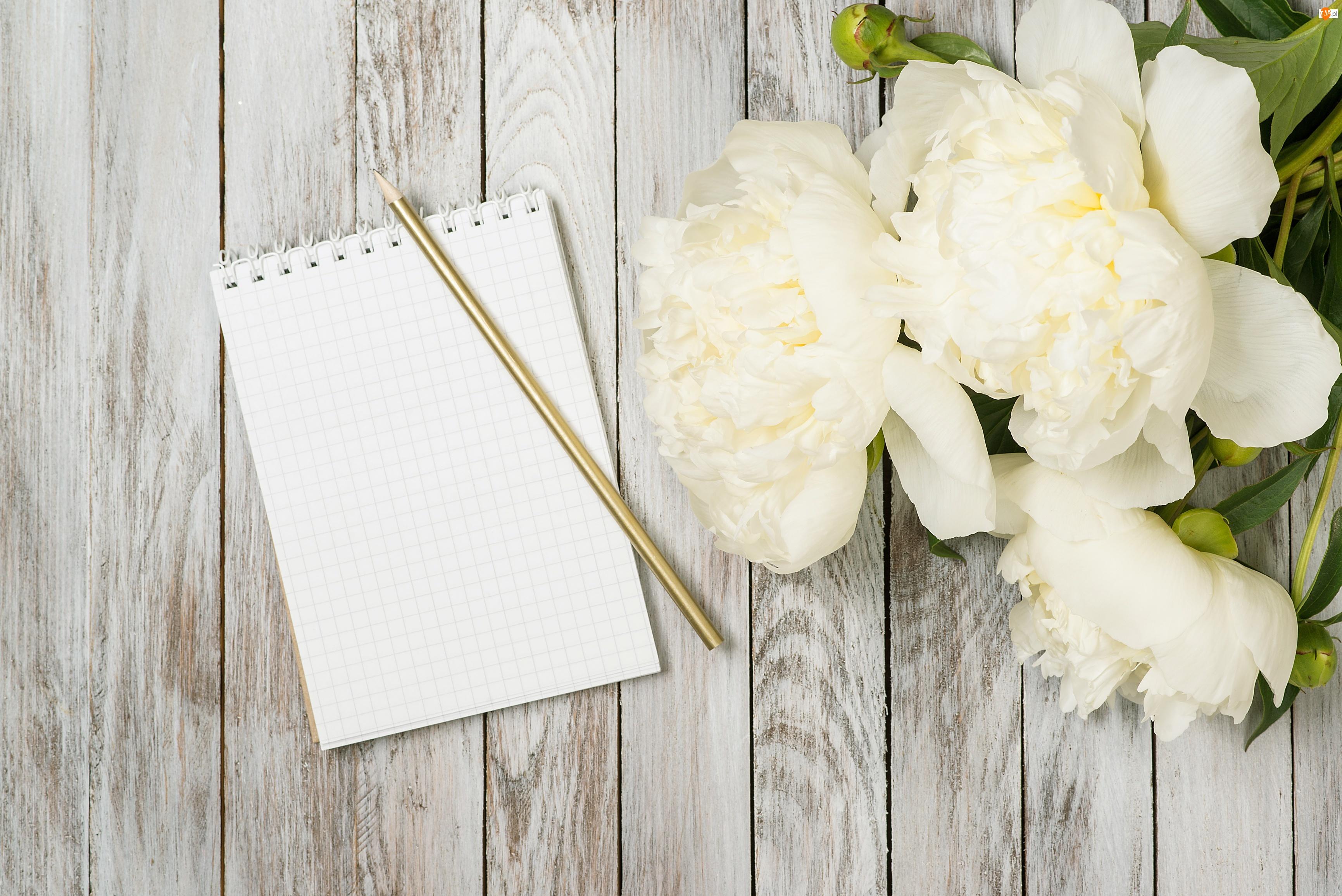 Piwonie, Deski, Notes, Ołówek