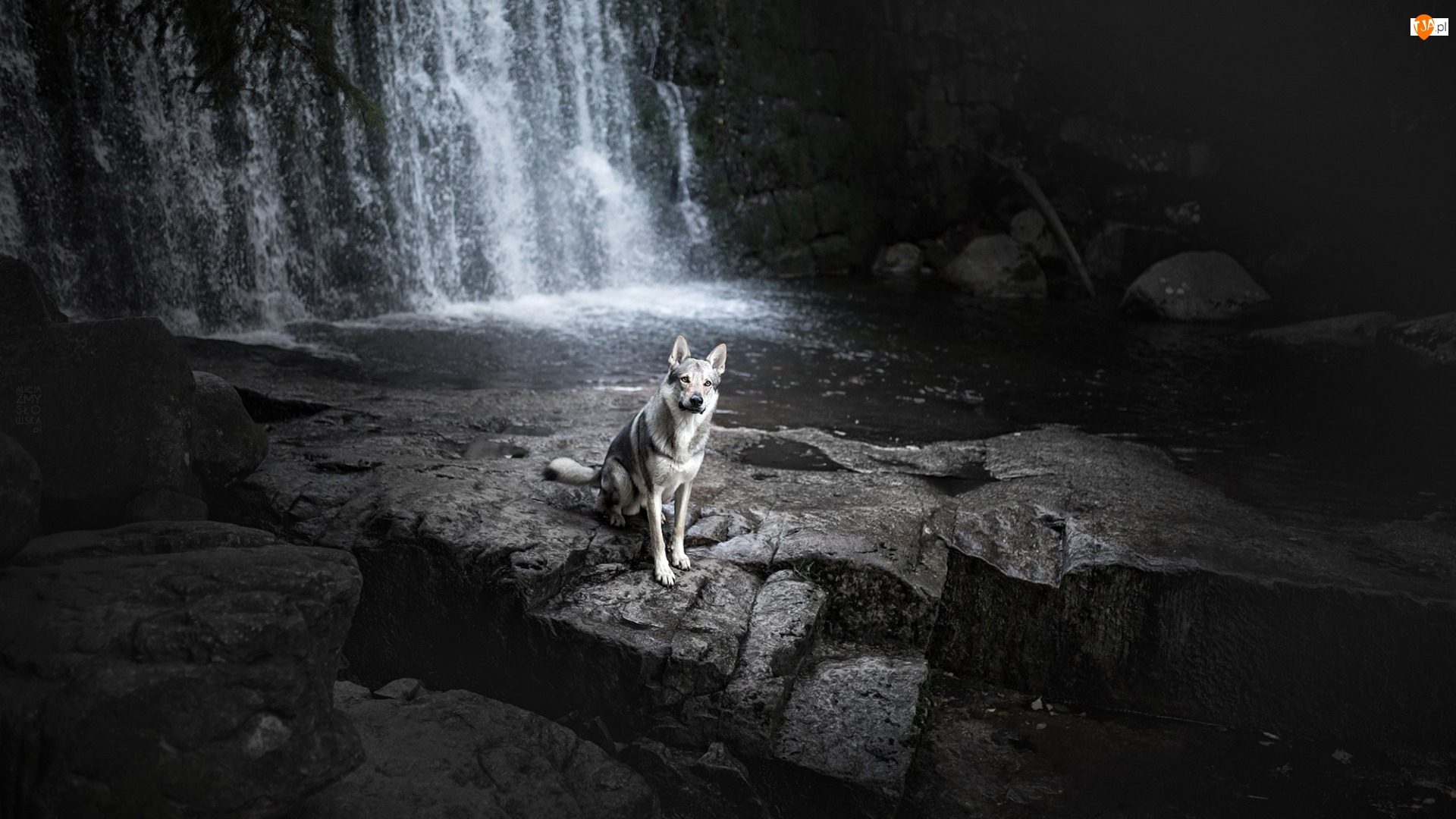Pies, Kamienie, Wilczak czechosłowacki, Skały