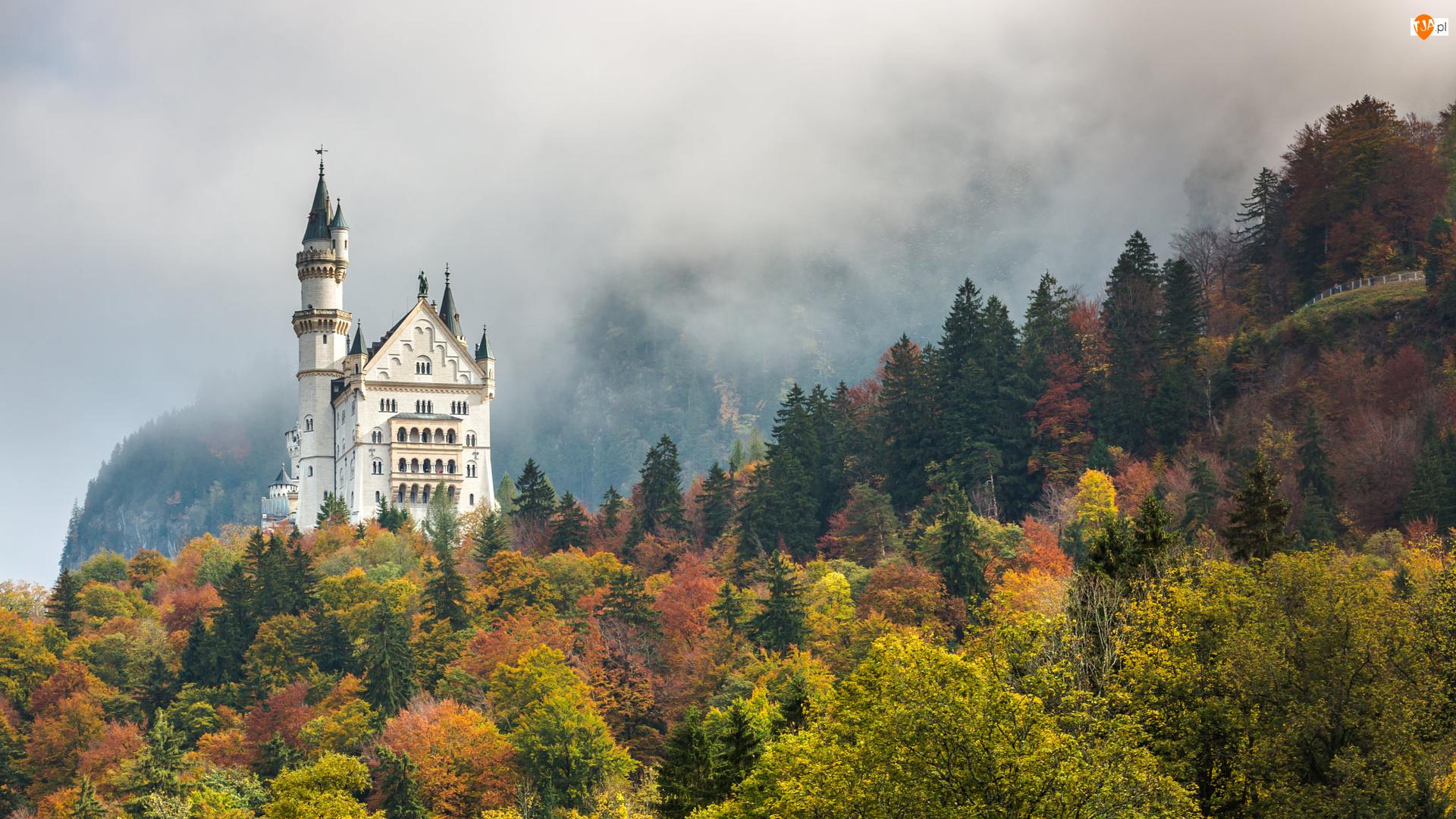 Las, Jesień, Bawaria, Niemcy, Drzewa, Zamek Neuschwanstein, Mgła