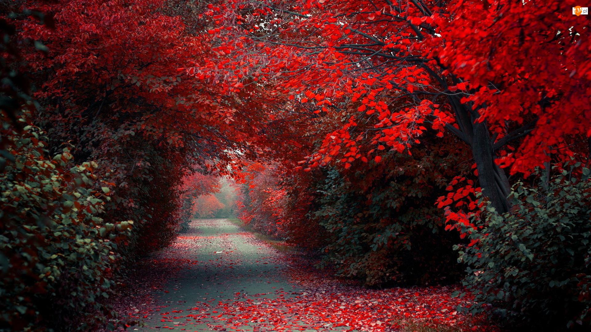 Park, Drzewa, Aleja, Jesień