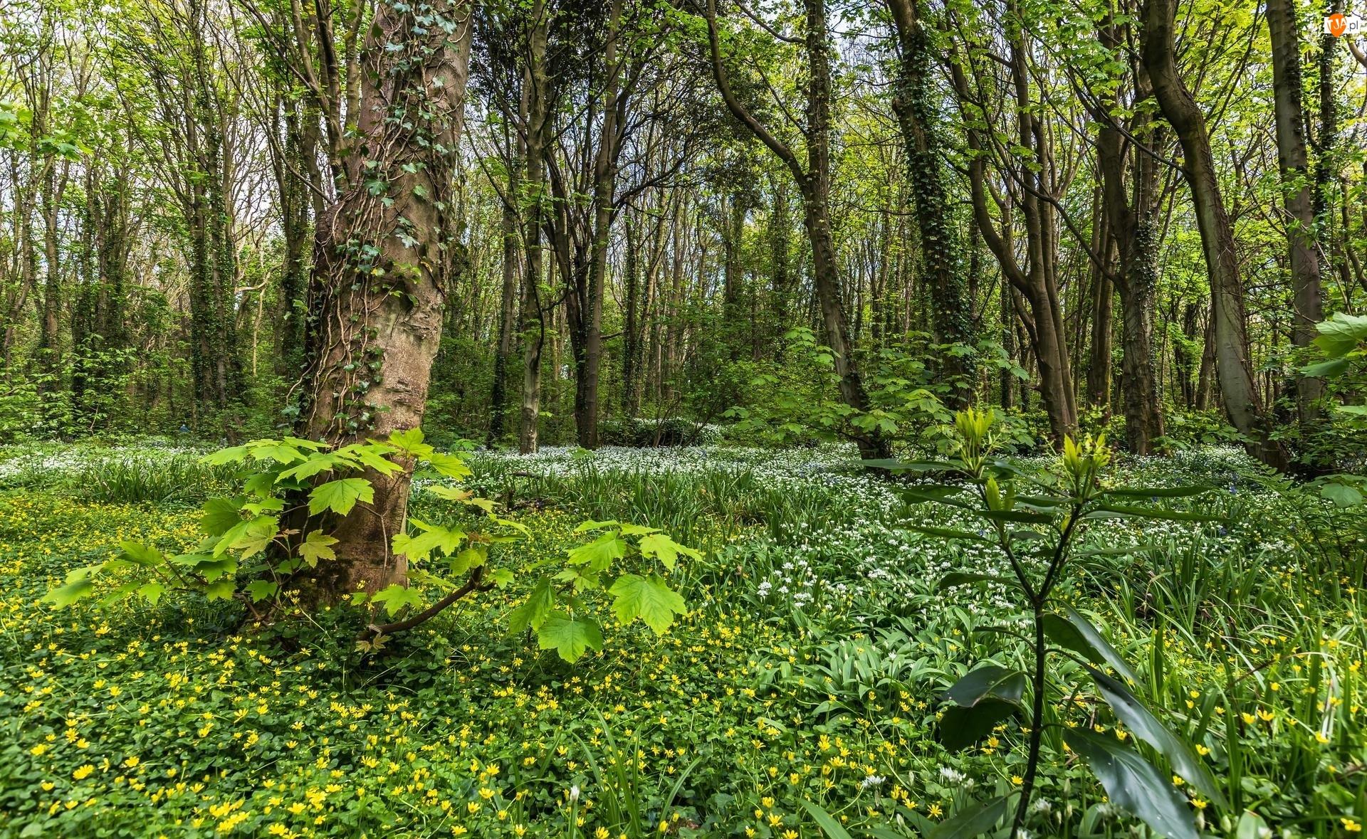 Las, Polana, Leśne, Kwiaty