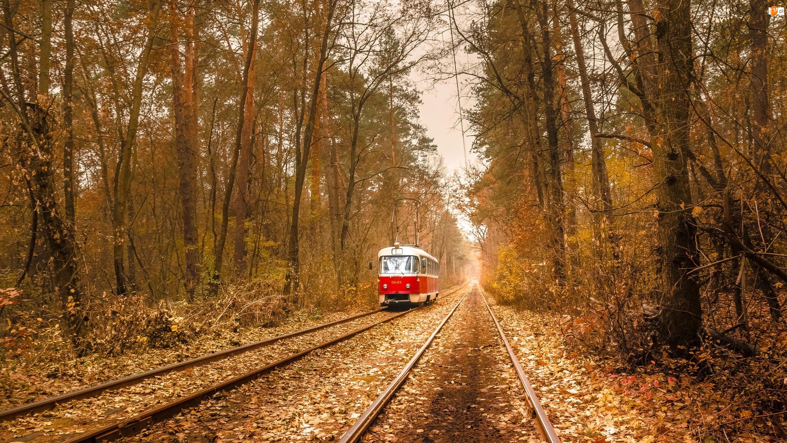 Jesień, Drzewa, Kijów, Tramwaj, Ukraina, Tory, Puszcza-Wodycia, Las
