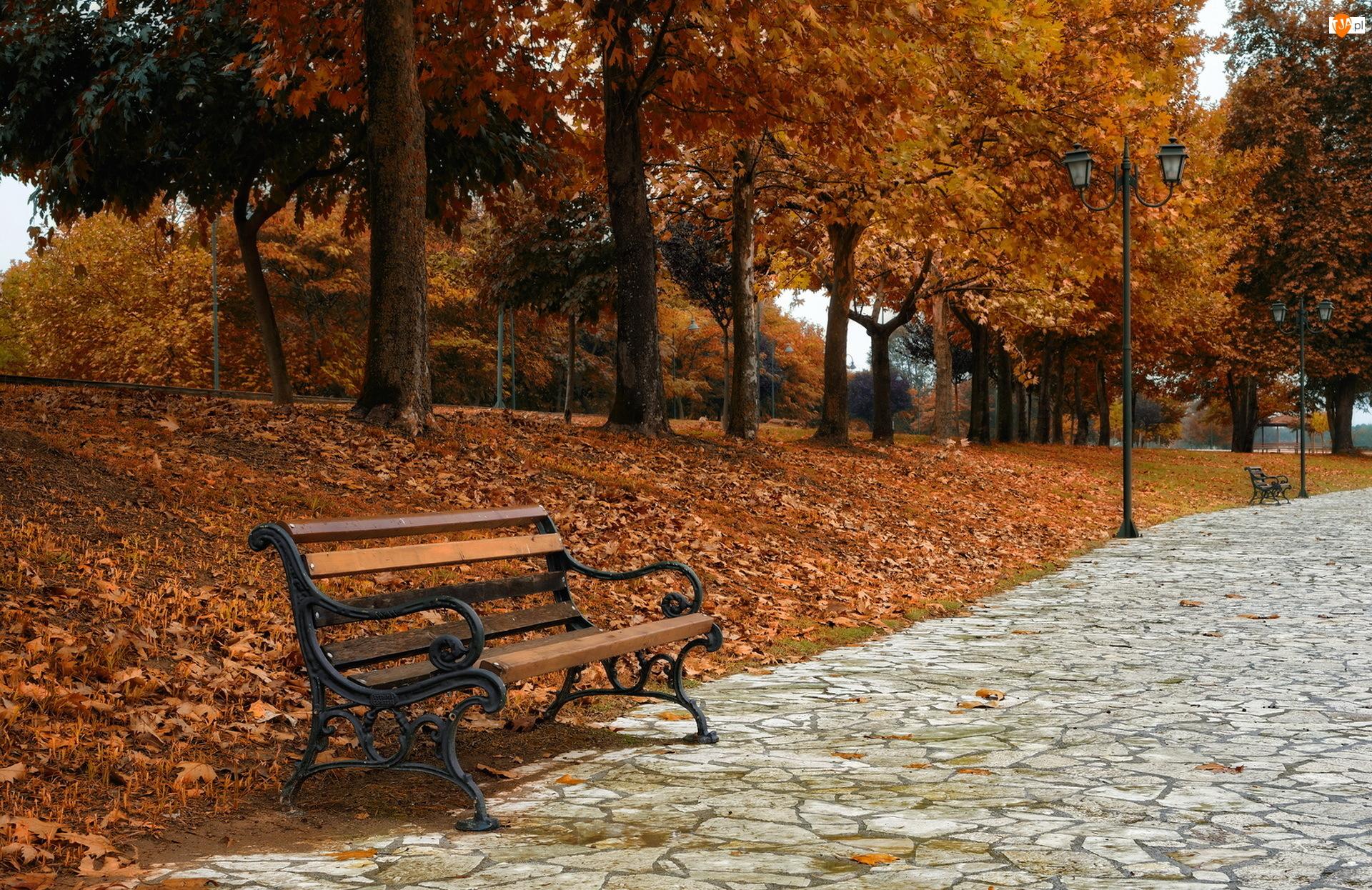 Jesień, Aleja, Park, Ławka