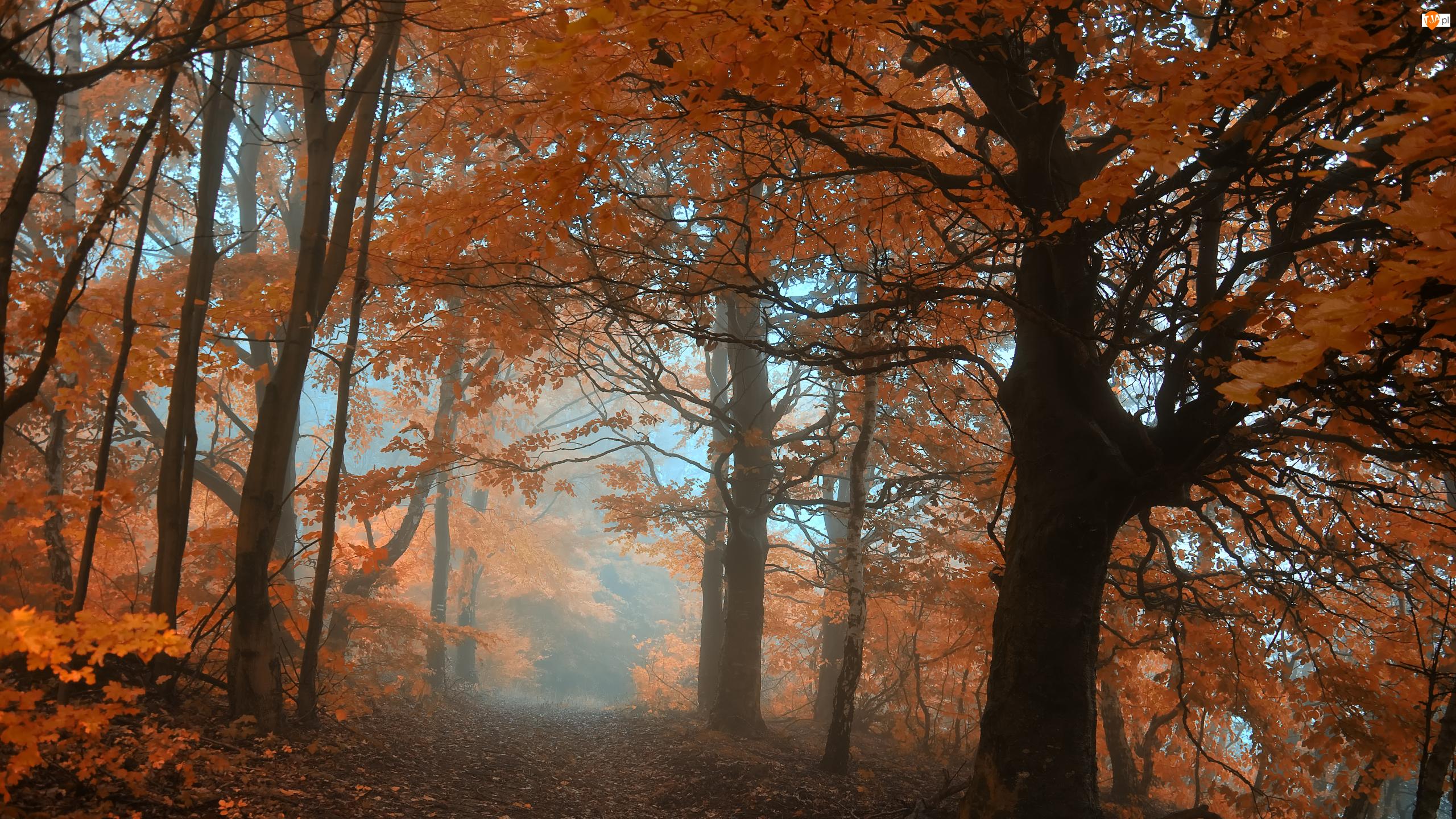 Droga, Jesień, Drzewa, Las, Mgła
