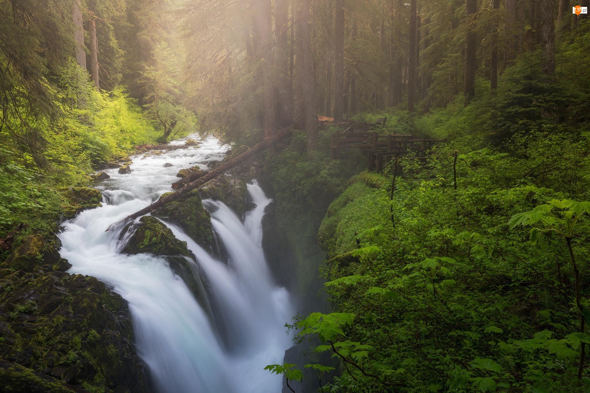 Las, Wodospad Sol Duc Falls, Stan Waszyngton, Drzewa, Stany Zjednoczone, Mgła, Park Narodowy Olympic, Rzeka