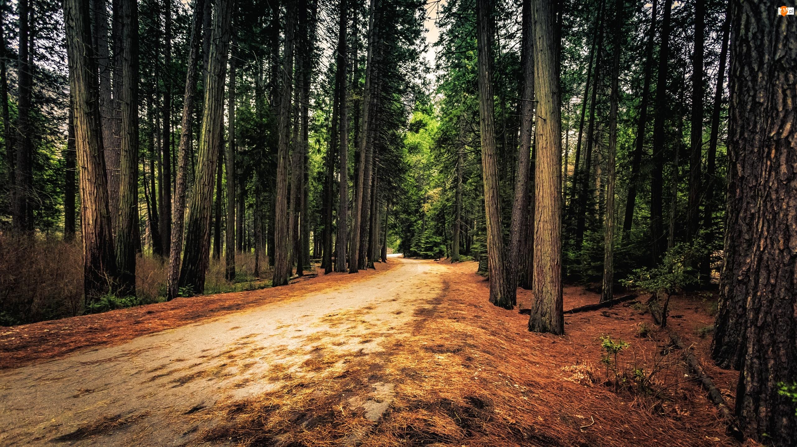Park Narodowy Yosemite, Drzewa, Stany Zjednoczone, Droga, Stan Kalifornia, Las