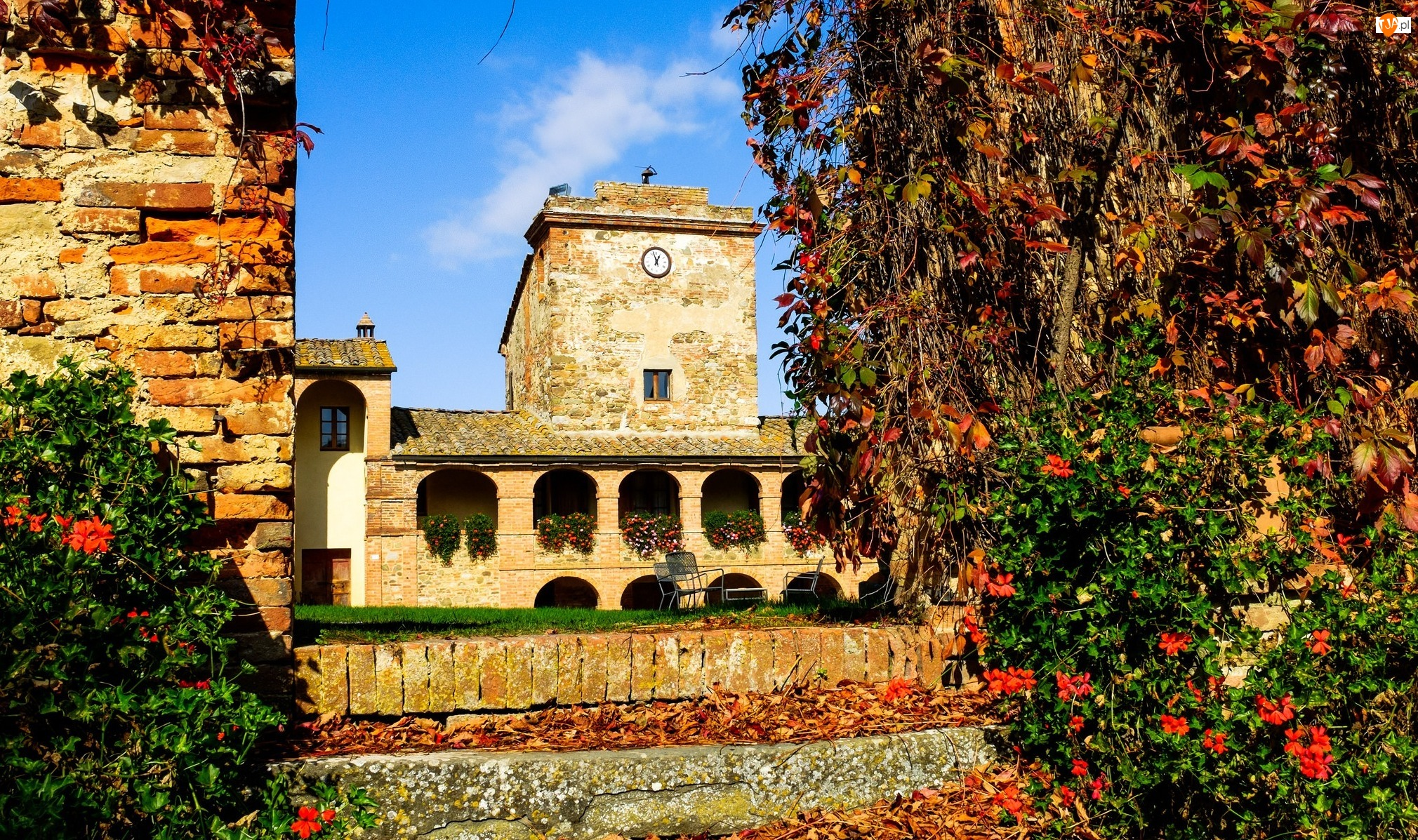 Drzewa, Włochy, Sinalunga, Toskania, Hotel Locanda dellAmorosa