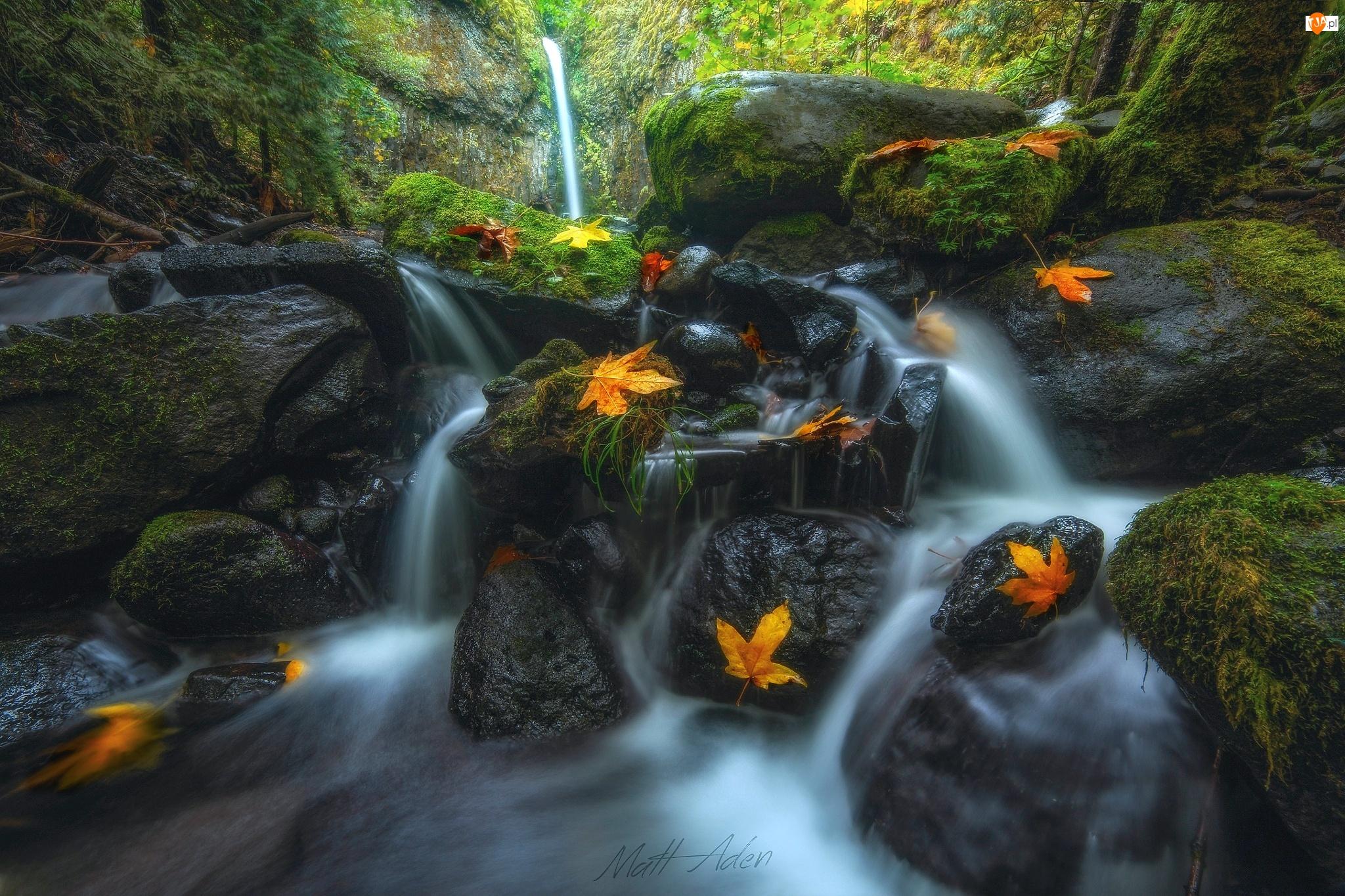 Roślinność, Las, Jesień, Mech, Stany Zjednoczone, Rezerwat przyrody Columbia River Gorge, Strumień, Stan Oregon, Kamienie, Wodospad Dry Creek Falls, Liście