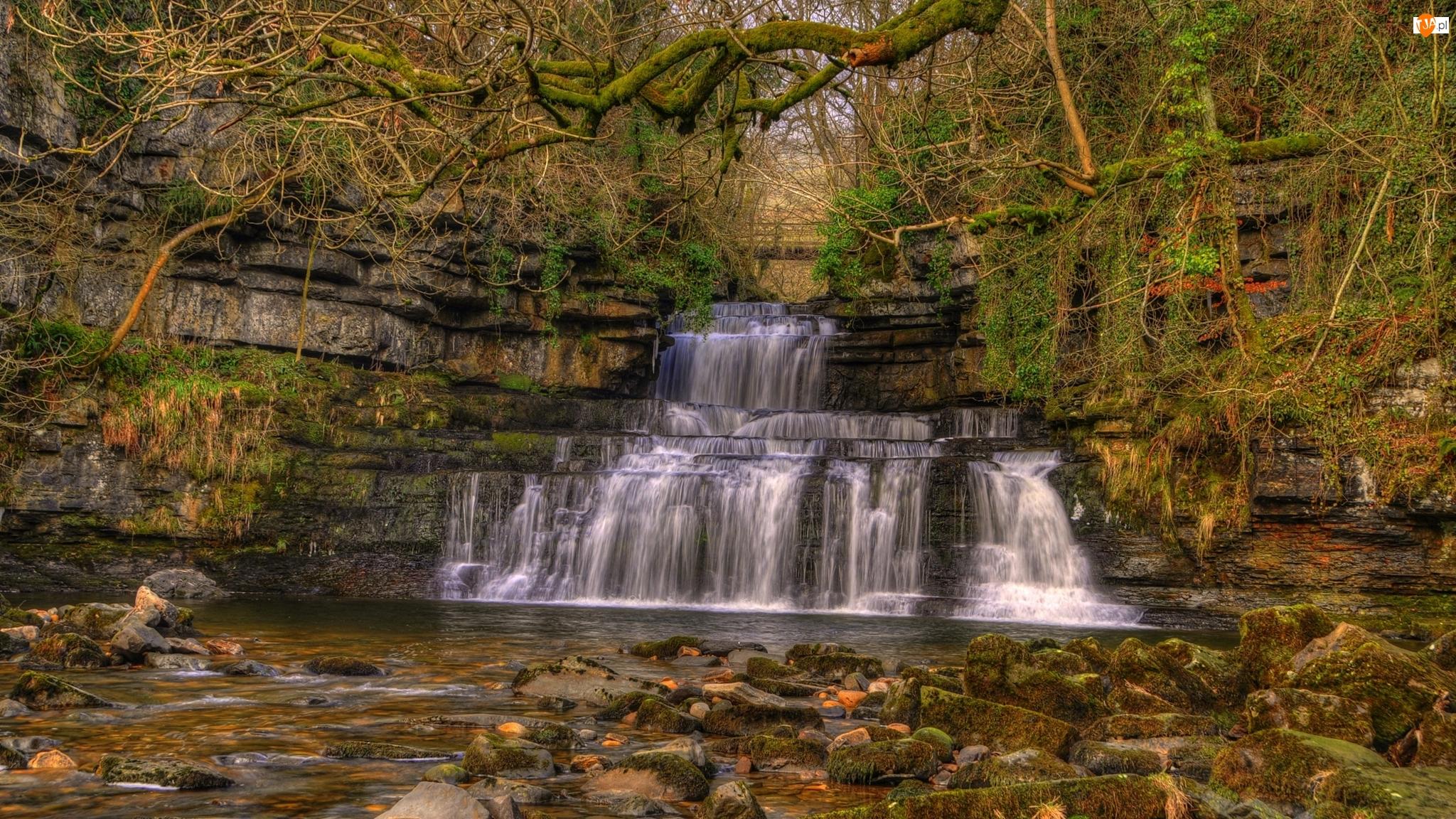 Rzeka Cotterdale Beck, Skały, Park Narodowy Yorkshire Dales, Kamienie, Anglia, Gałęzie, Wodospad Cotter Force, Omszałe