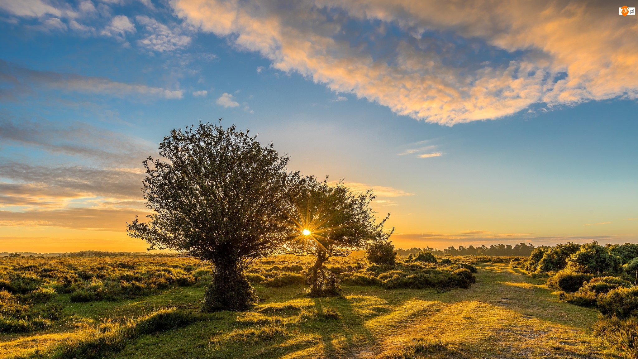 Wschód słońca, Anglia, Łąka, Park Narodowy New Forest, Drzewa