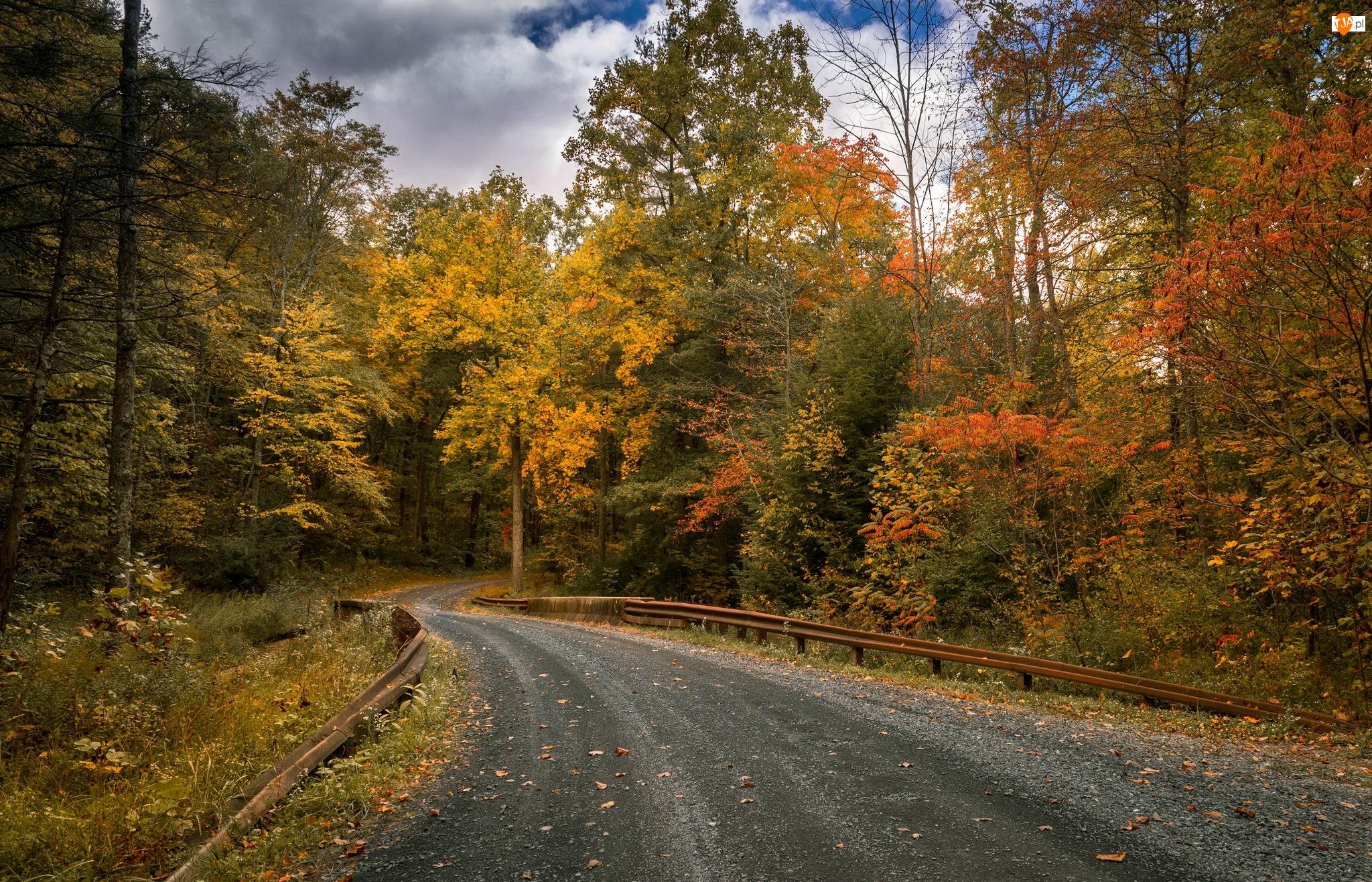 Jesień, Droga, Drzewa, Las