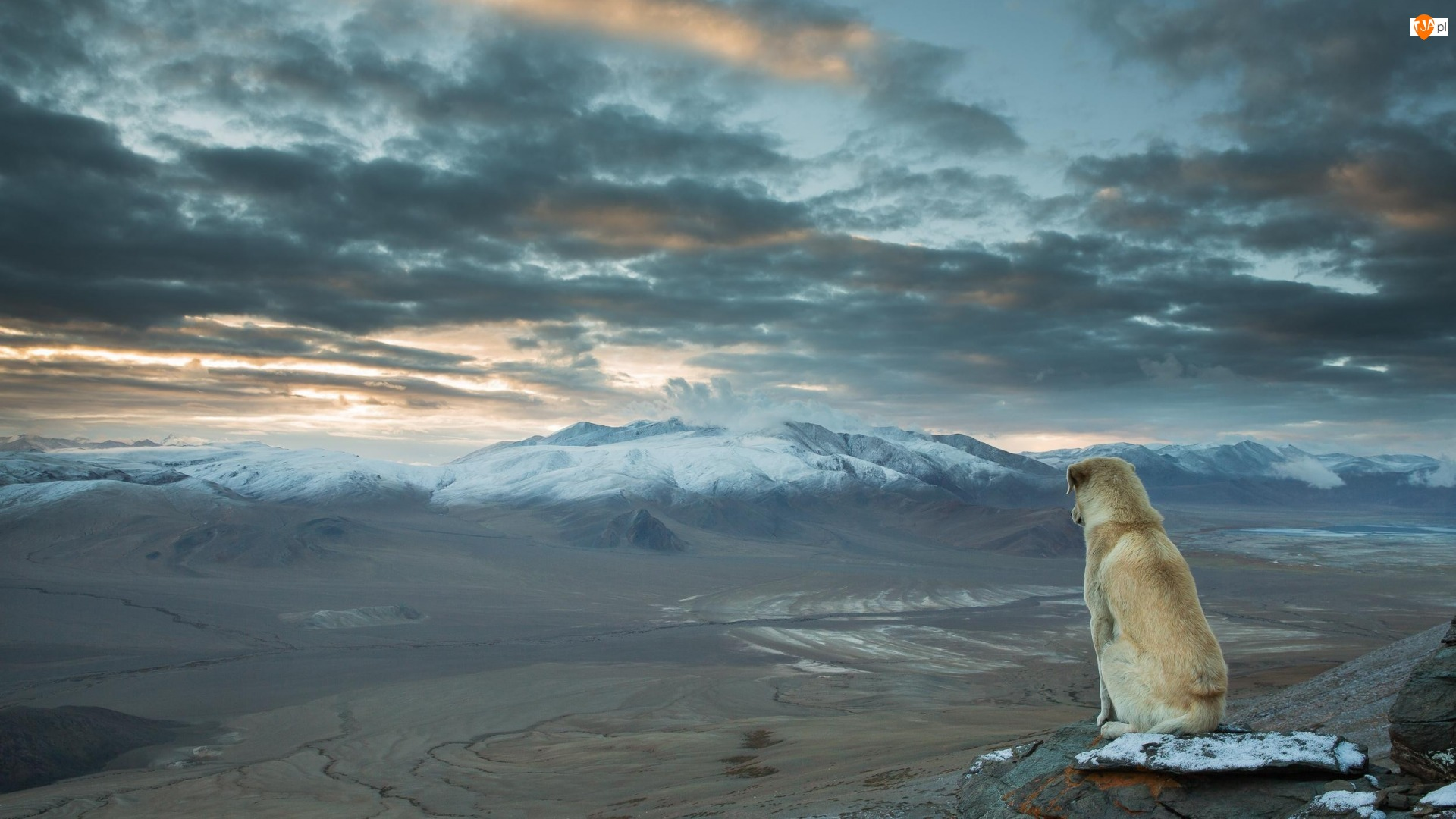 Pies, Indie, Góry Himalaje, Chmury, Dolina