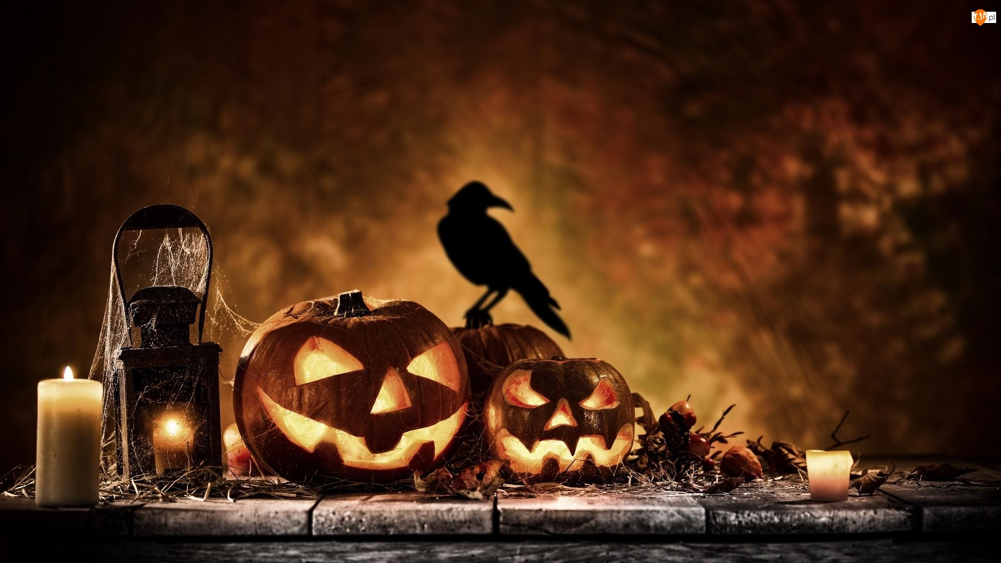 Ptak, Halloween, Świece, Dynie, Lampion